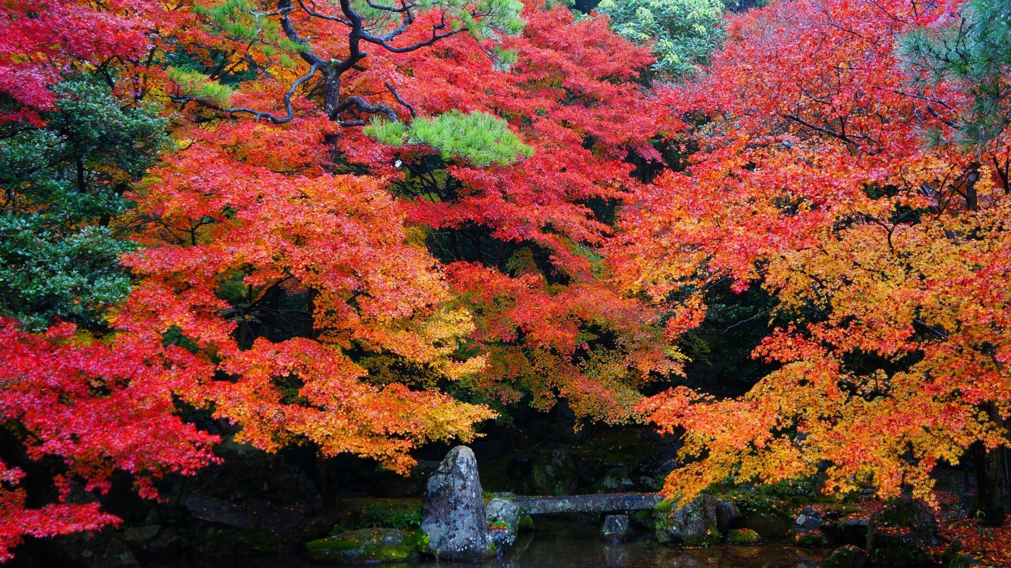 蓮華寺の庭園の色とりどりの圧巻の紅葉