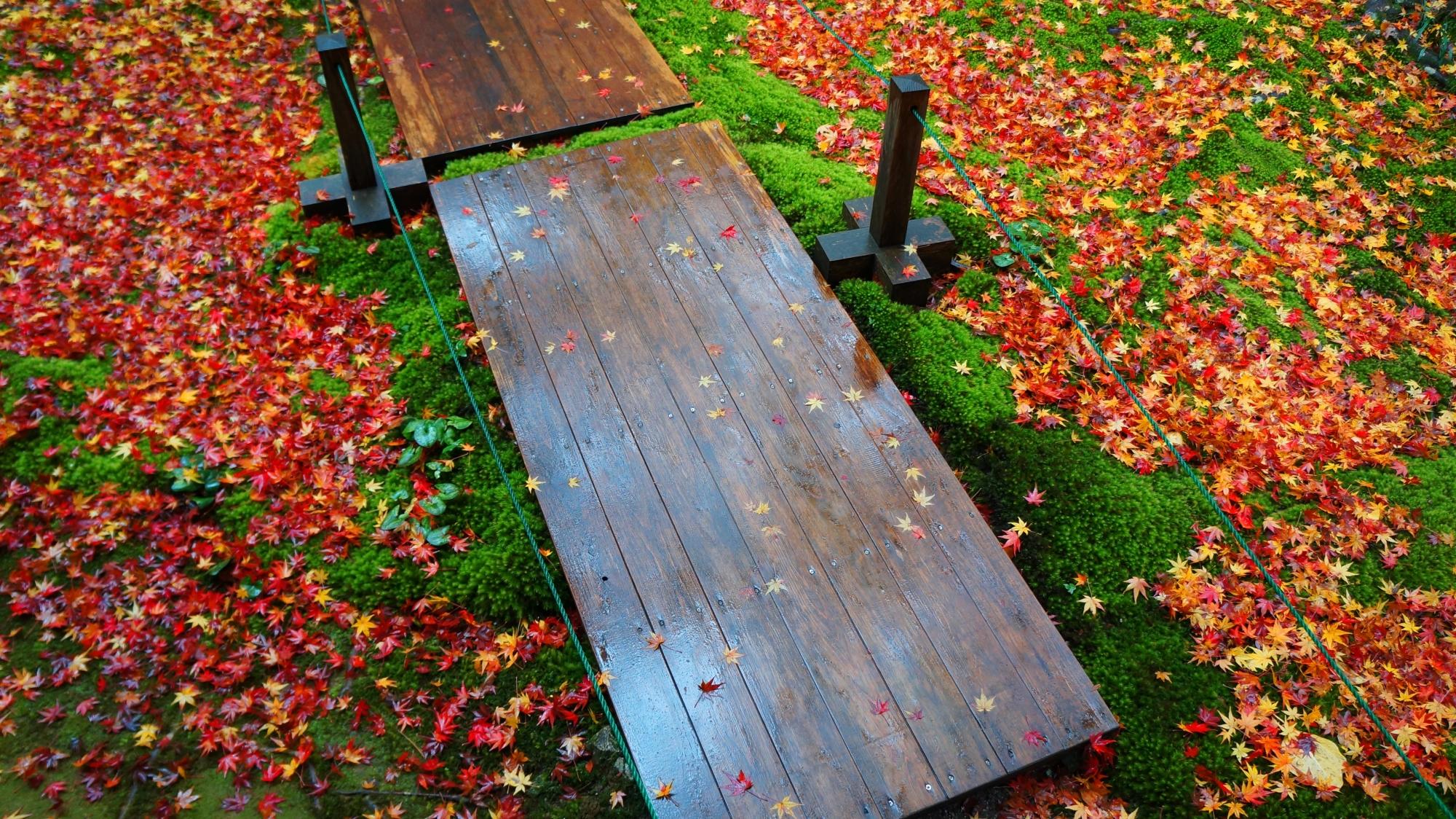 蓮華寺庭園の参道の両脇の華やかな散り紅葉