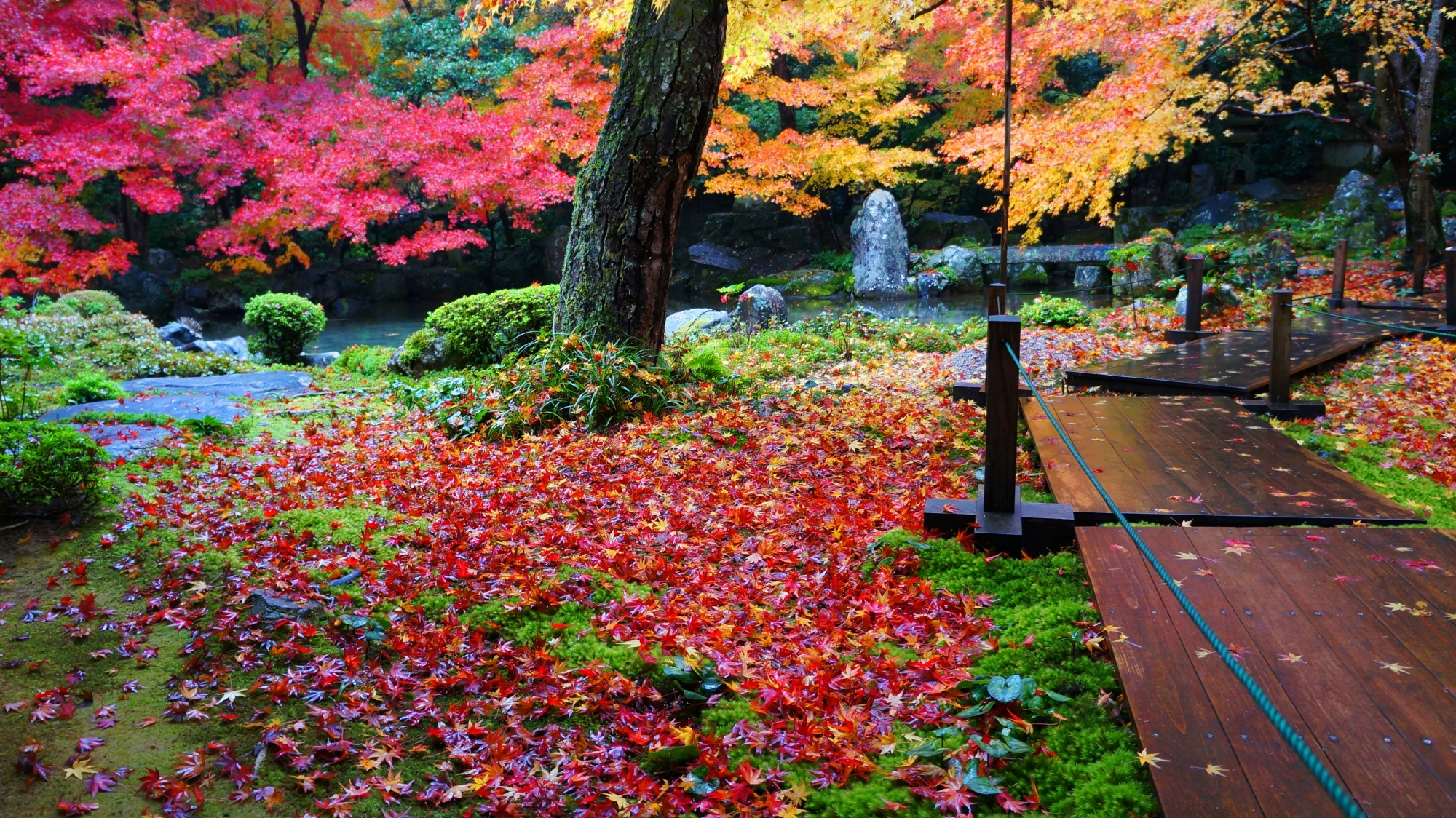 Beautiful autumnal leaves and divergent autumn leaves of Renge-ji Temple in Kyoto
