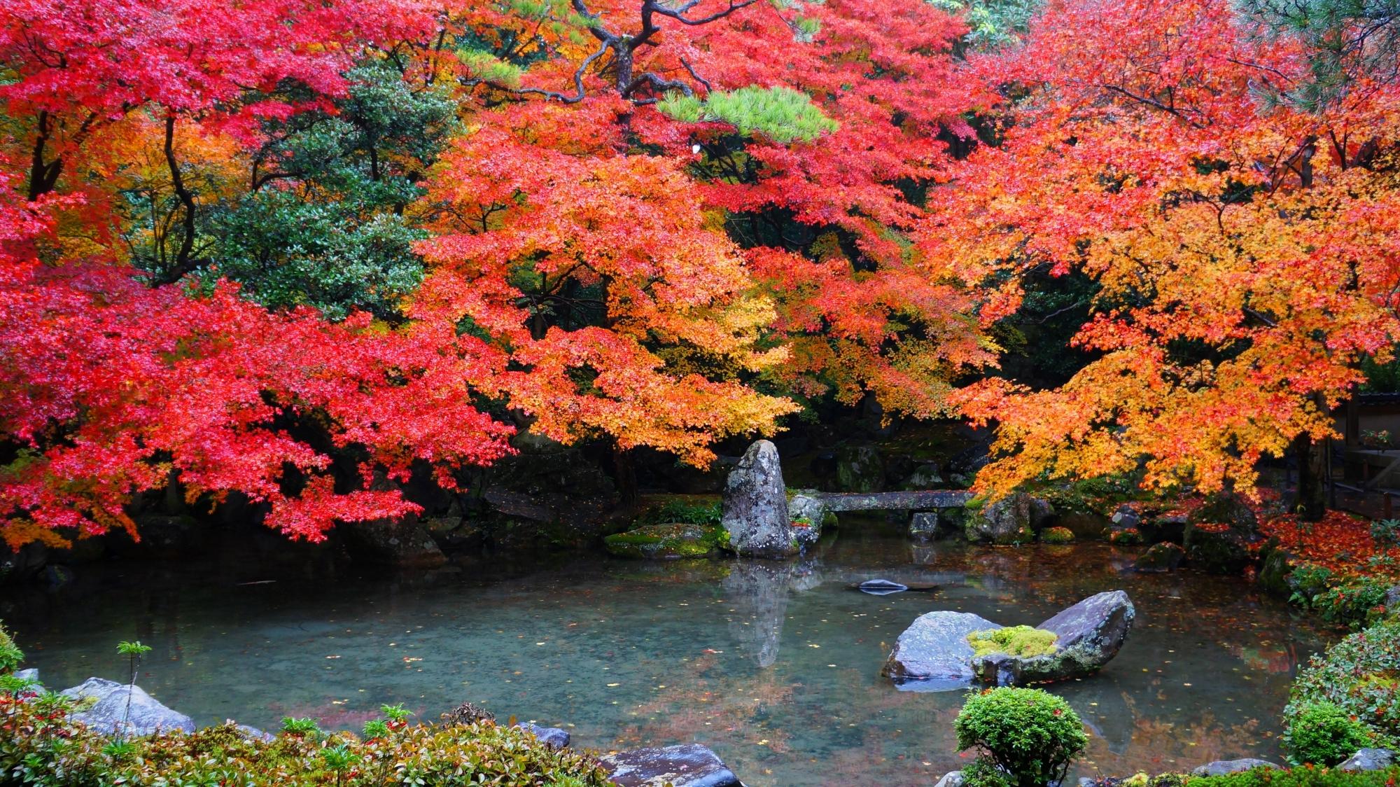 蓮華寺の池泉式庭園の圧巻の紅葉