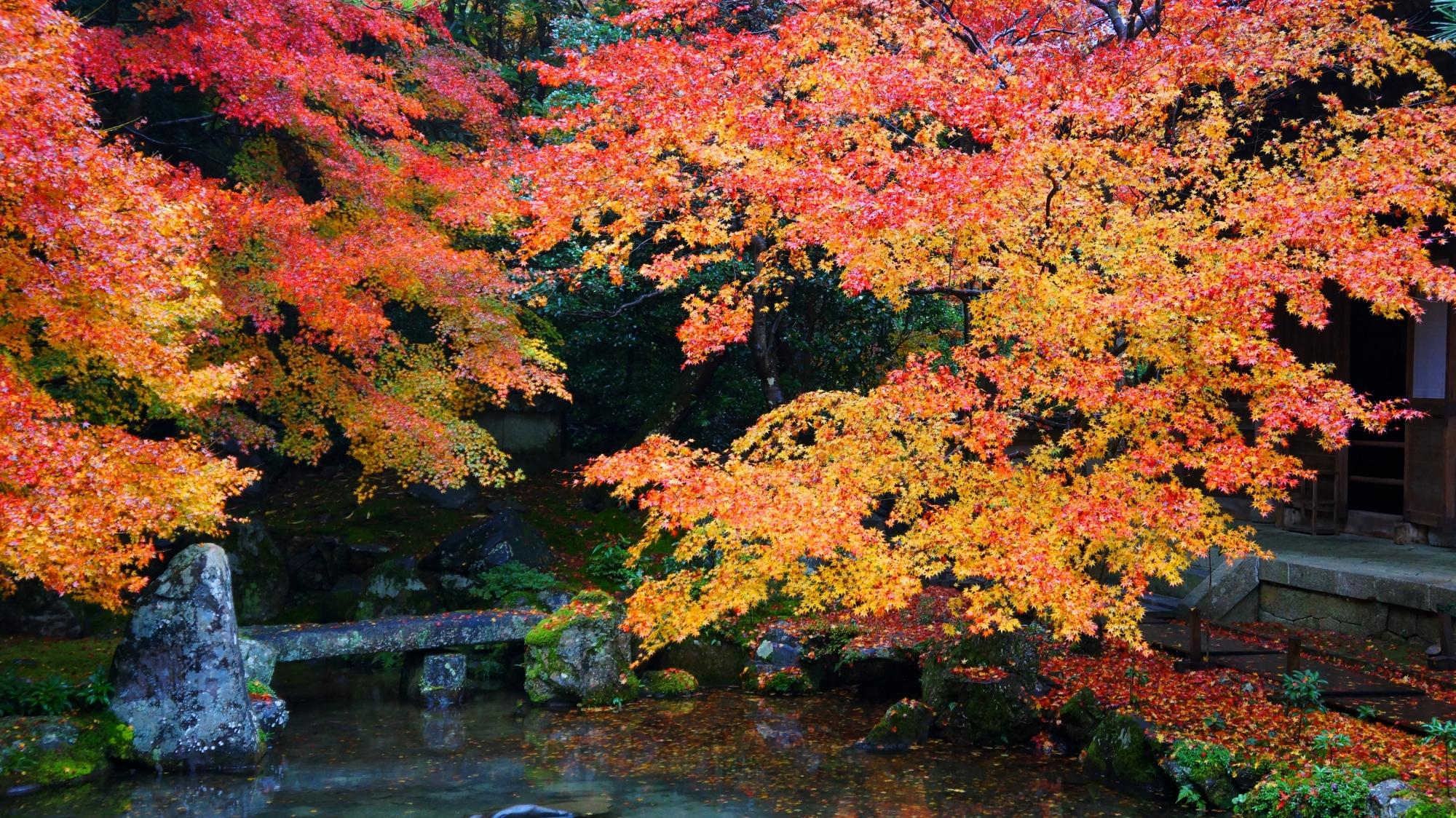 見事な秋の水辺の景色