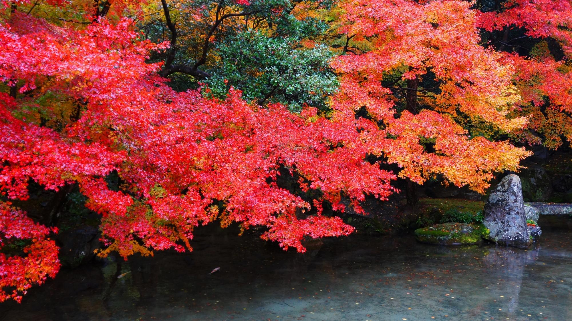 蓮華寺 高画質 紅葉 写真