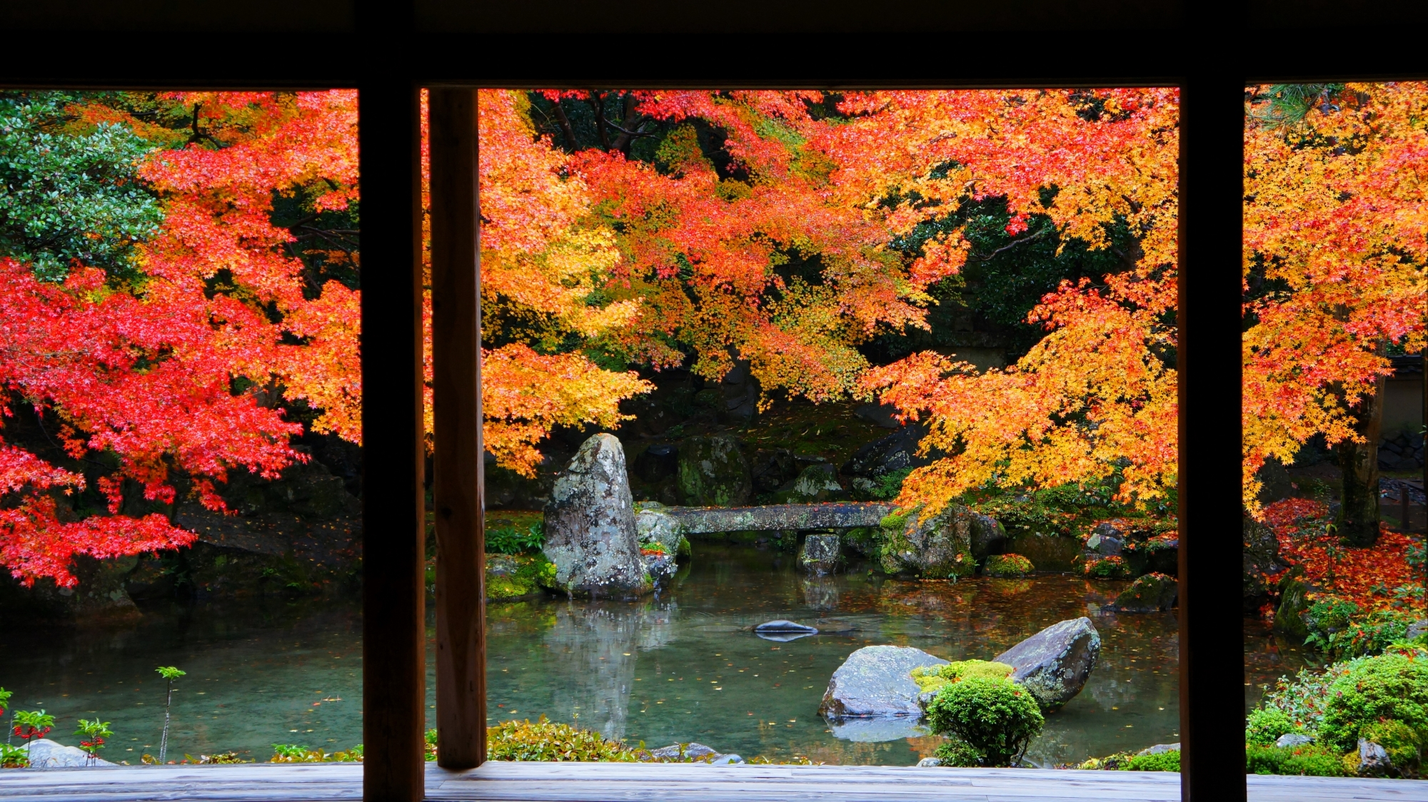 蓮華寺の書院奥から眺めた紅葉の池泉式庭園