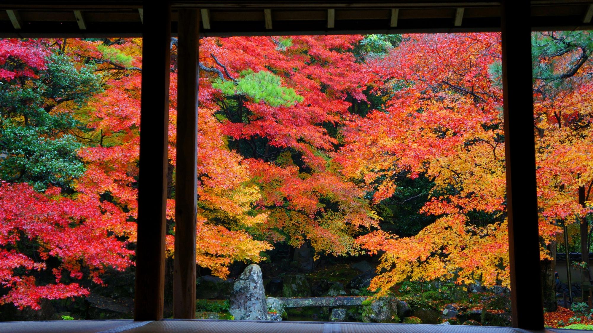 溢れ出しそうな色とりどりの紅葉