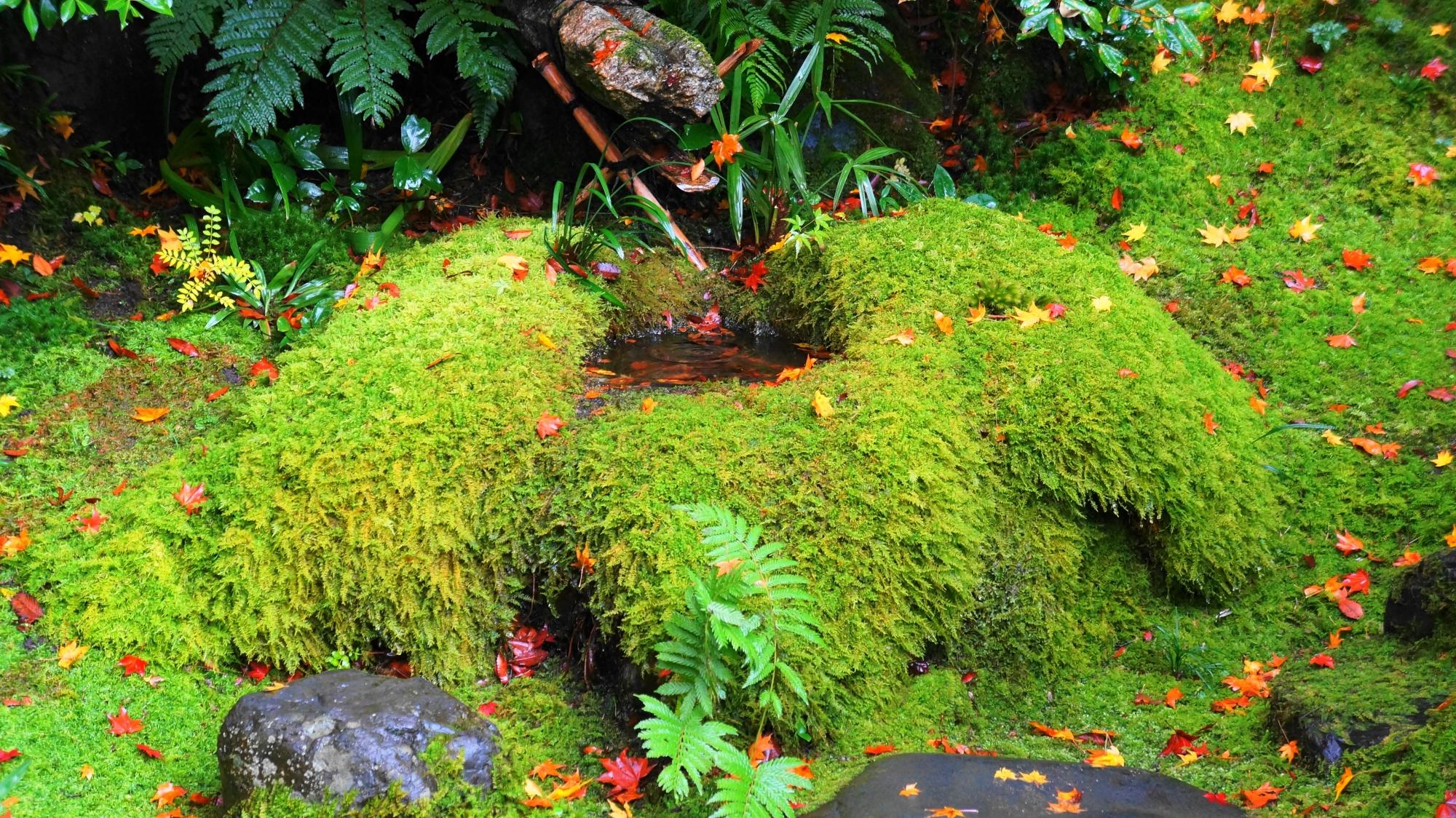 茶庵「喜鶴亭」の苔に覆われた手水鉢