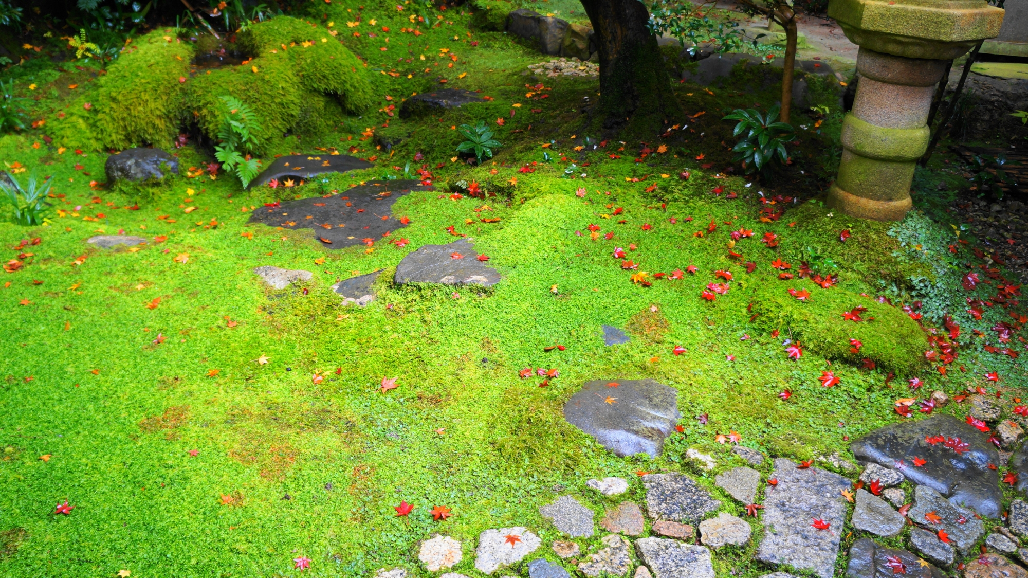 風情の中に華やかさがある苔と散紅葉