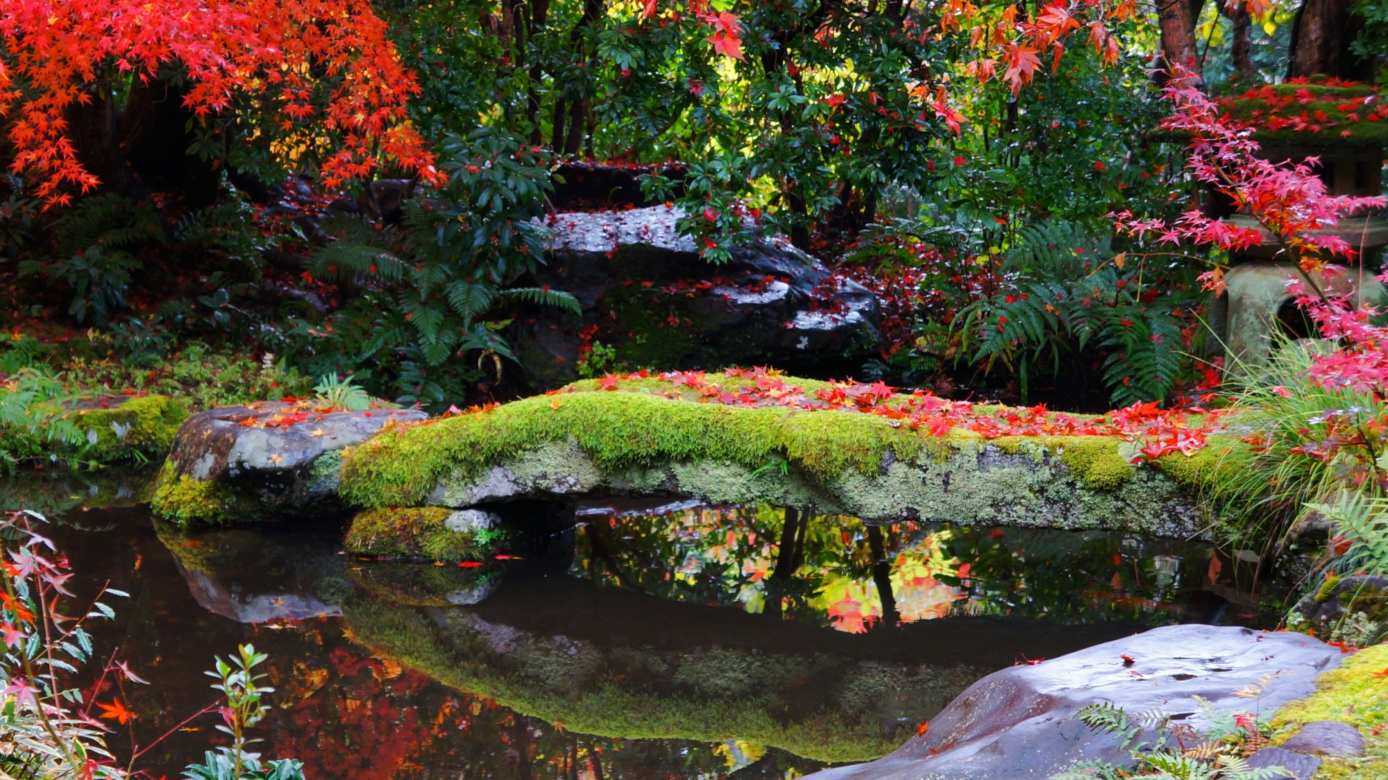 苔に覆われた石橋に散る鮮やかな紅葉