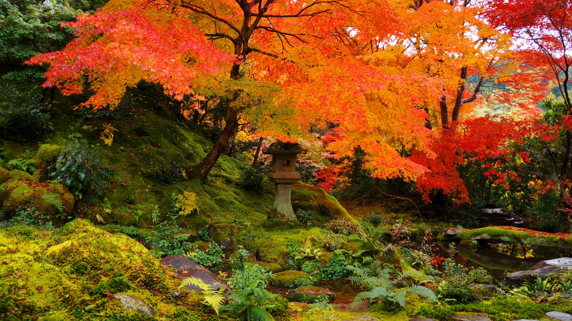瑠璃光院の臥龍の庭(がりょうのにわ)