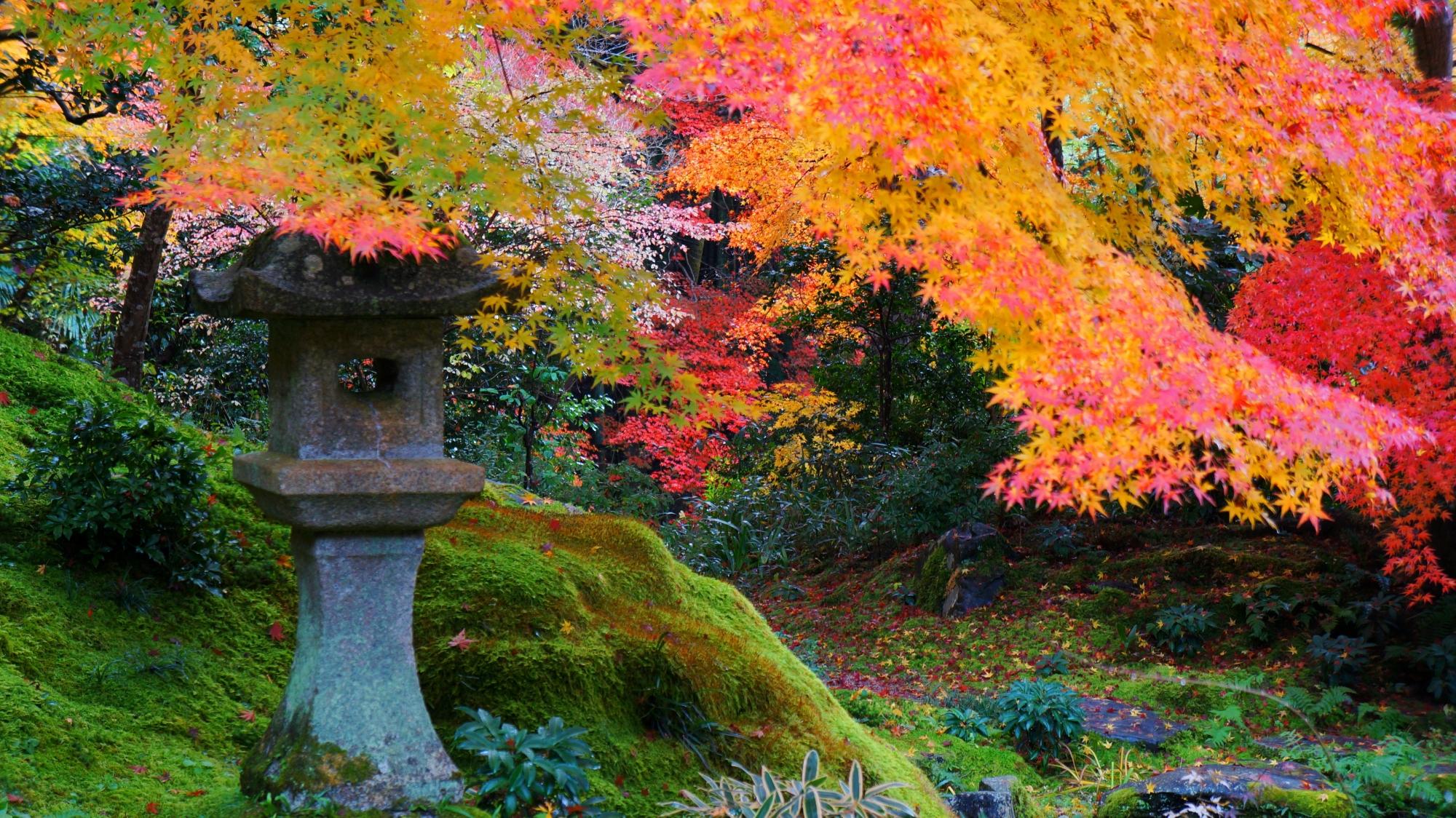 臥龍の庭の燈籠と鮮やかな紅葉