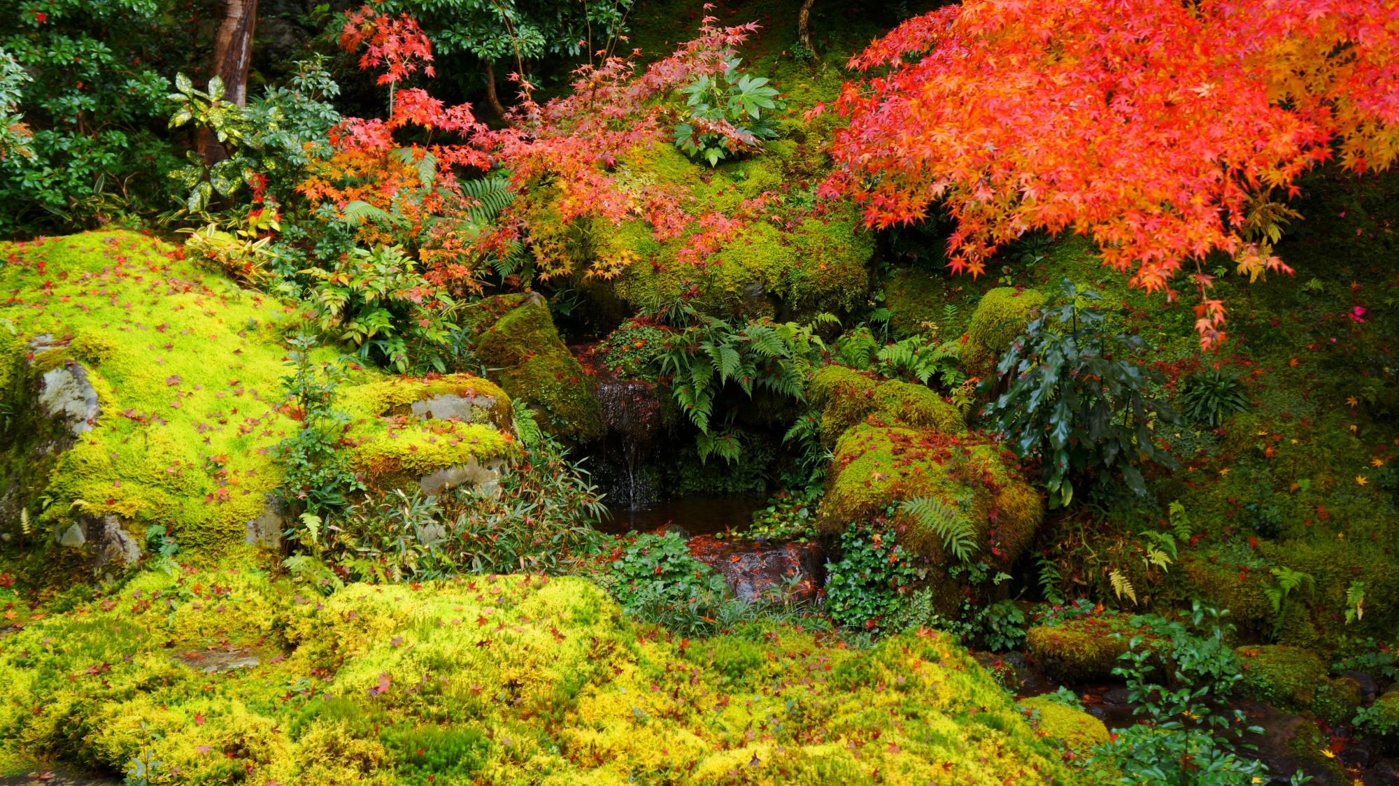 臥龍の庭の小さな川