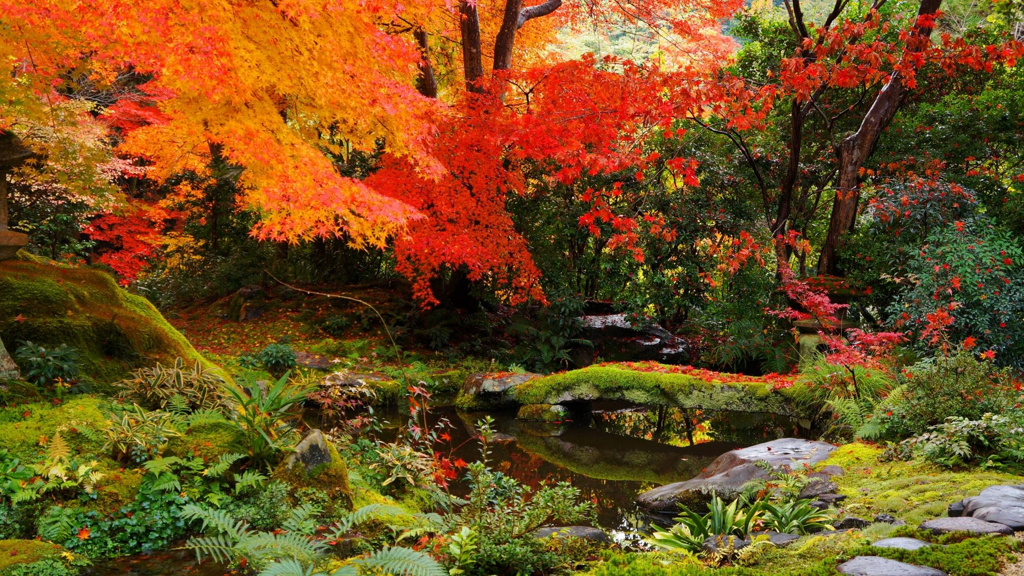 臥龍の庭の緑と赤やオレンジの美しいコントラスト