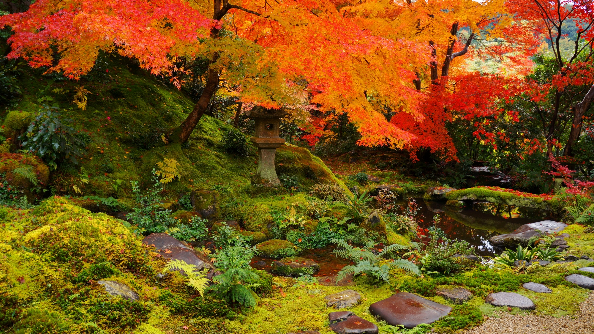 瑠璃光院の風情ある秋の臥龍の庭