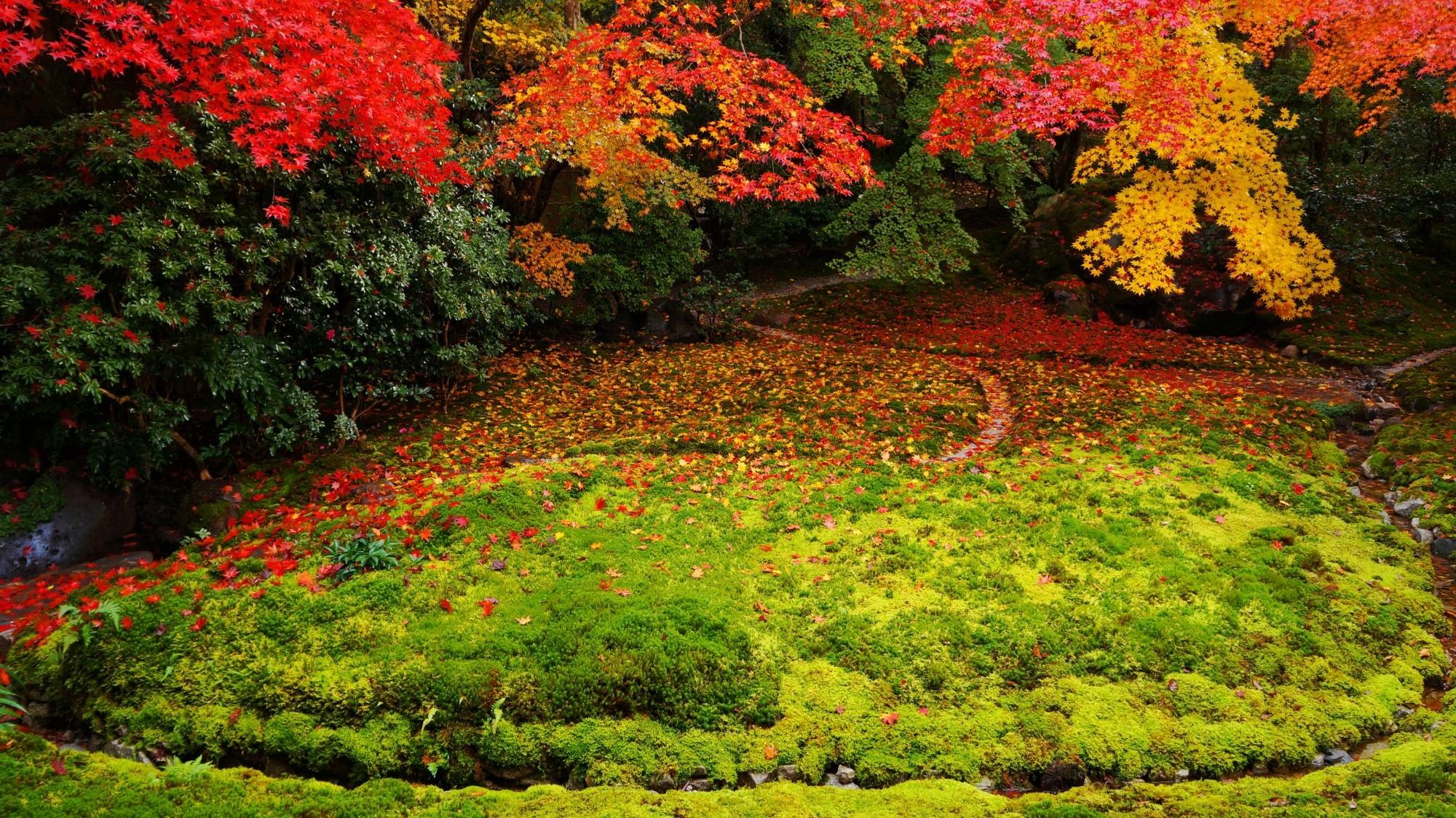 瑠璃の庭の緑の苔と色とりどりの紅葉とのコントラスト