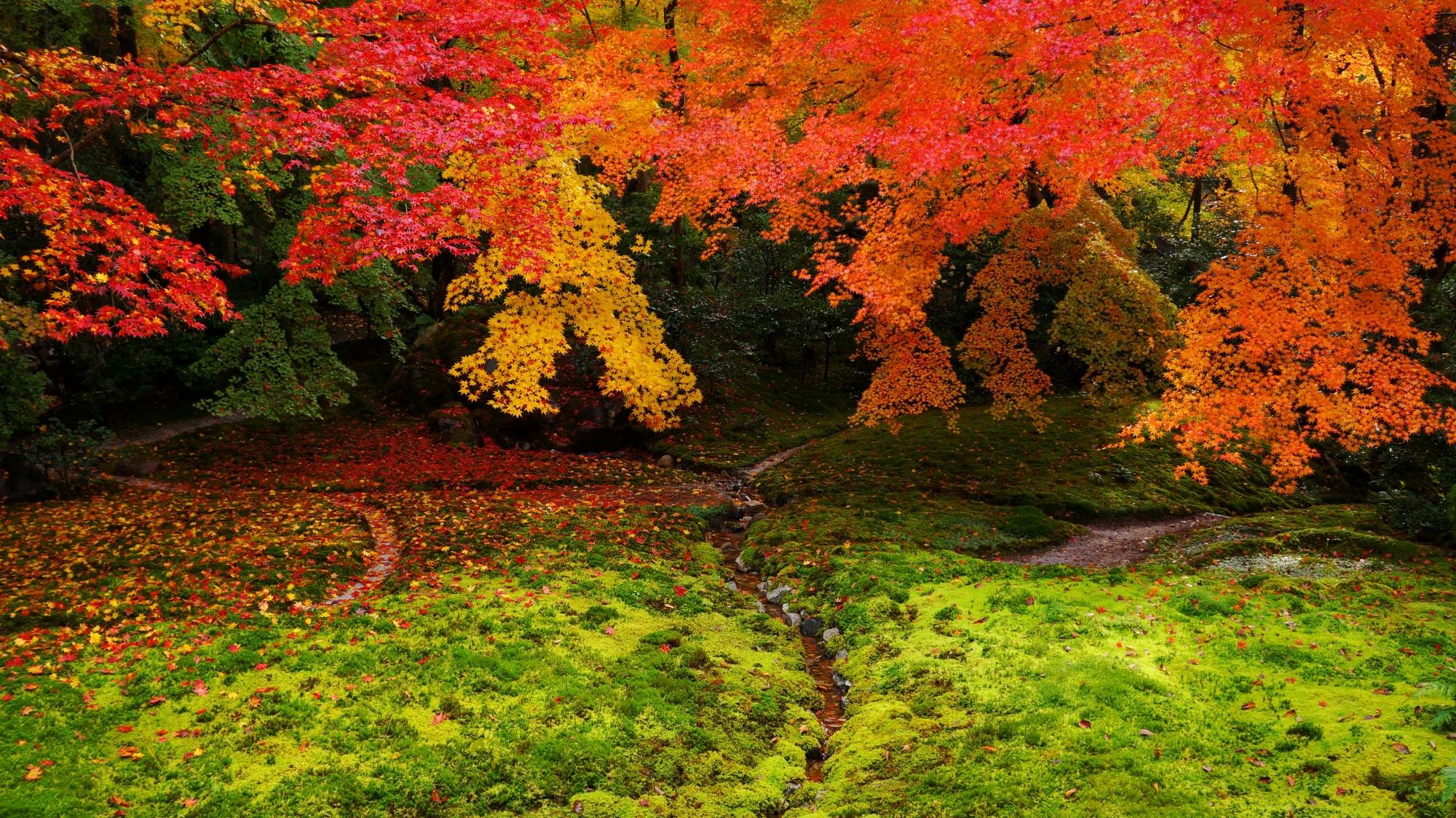 柔らかな苔と見ごろをむかえた紅葉