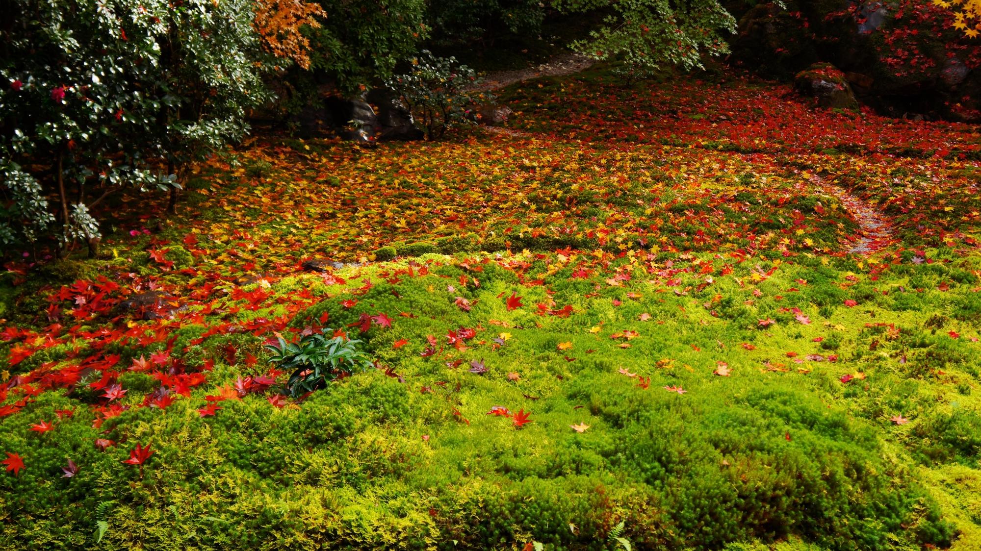 緑の苔や岩に華やかに散る綺麗な紅葉