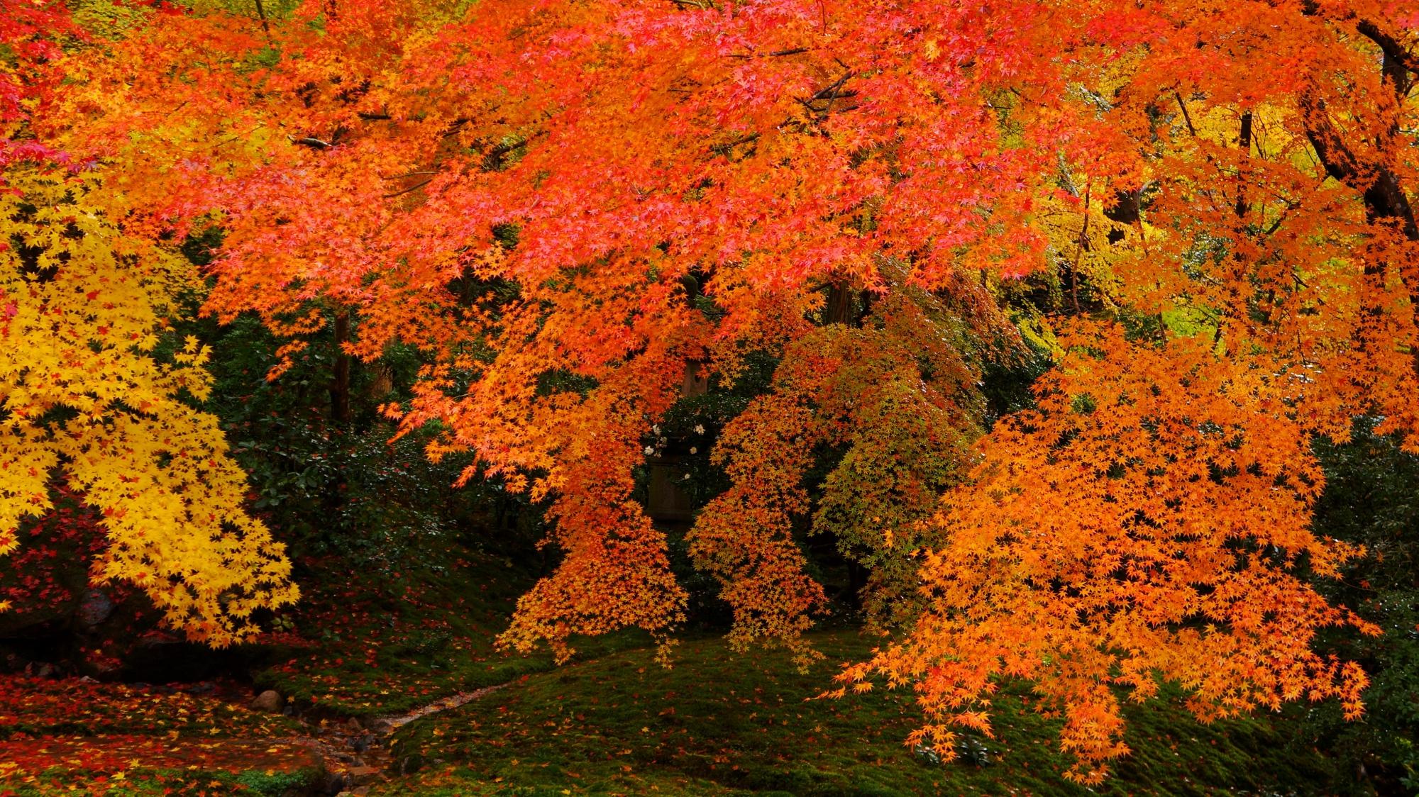 瑠璃の庭の秋色の紅葉の空間