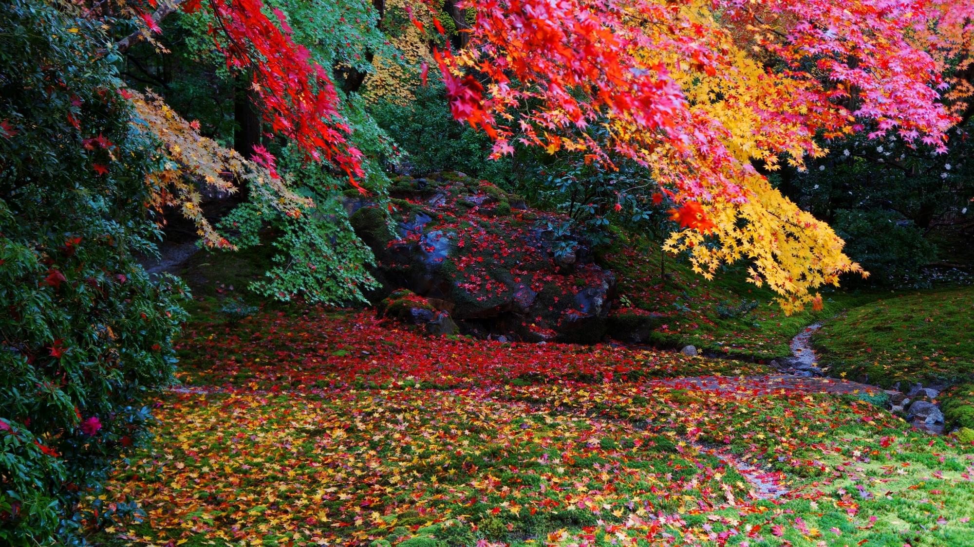 散り紅葉と雨で輝く瑠璃の庭と大きな岩