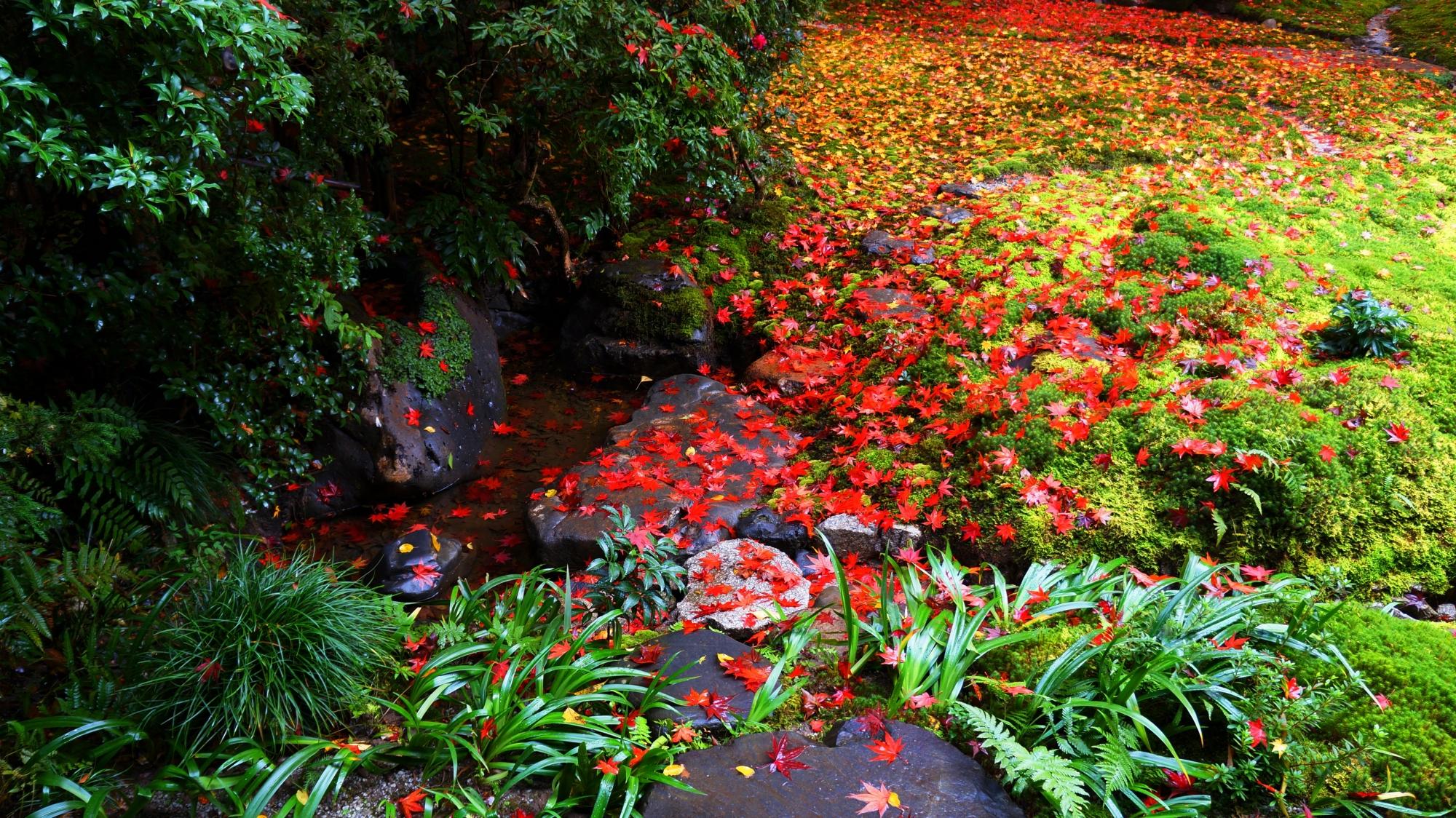多種多様な緑の植物や岩に散った鮮やかな紅葉