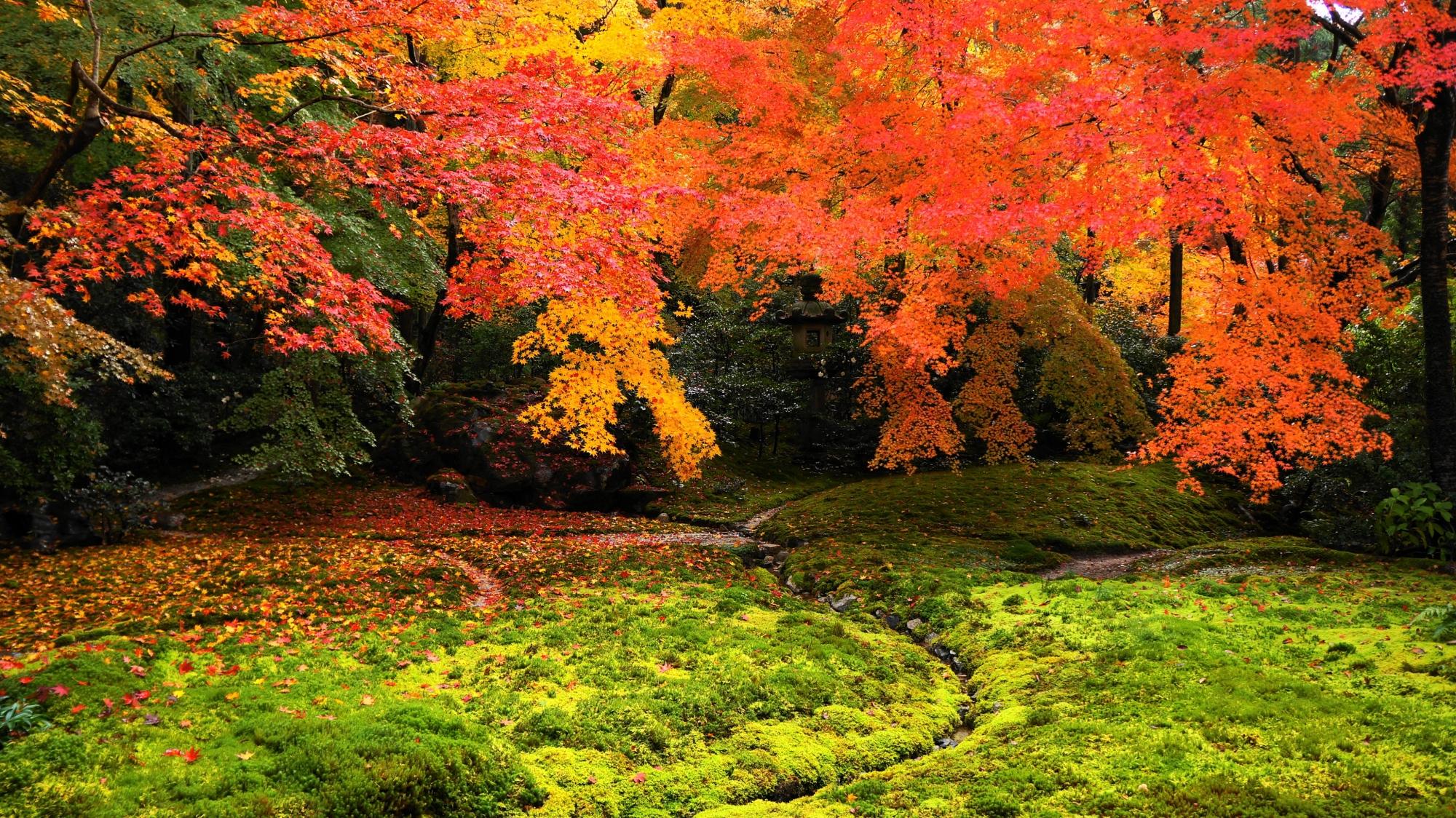 八瀬瑠璃光院の最高の庭園である瑠璃の庭