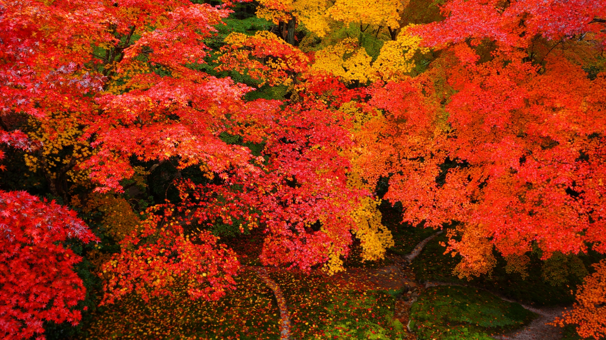 Ultimate autumn leaves of Rurikoin-Temple in Kyoto,Japan