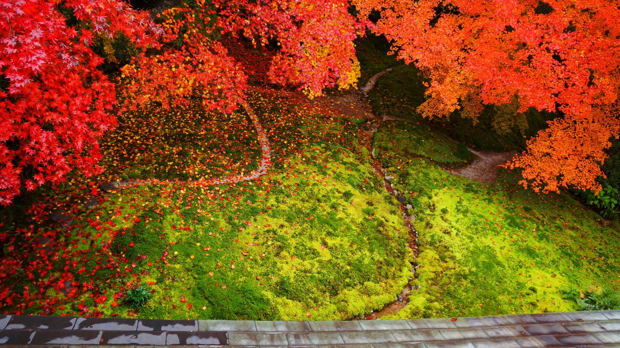 瑠璃光院 高画質 紅葉 写真 瑠璃の庭