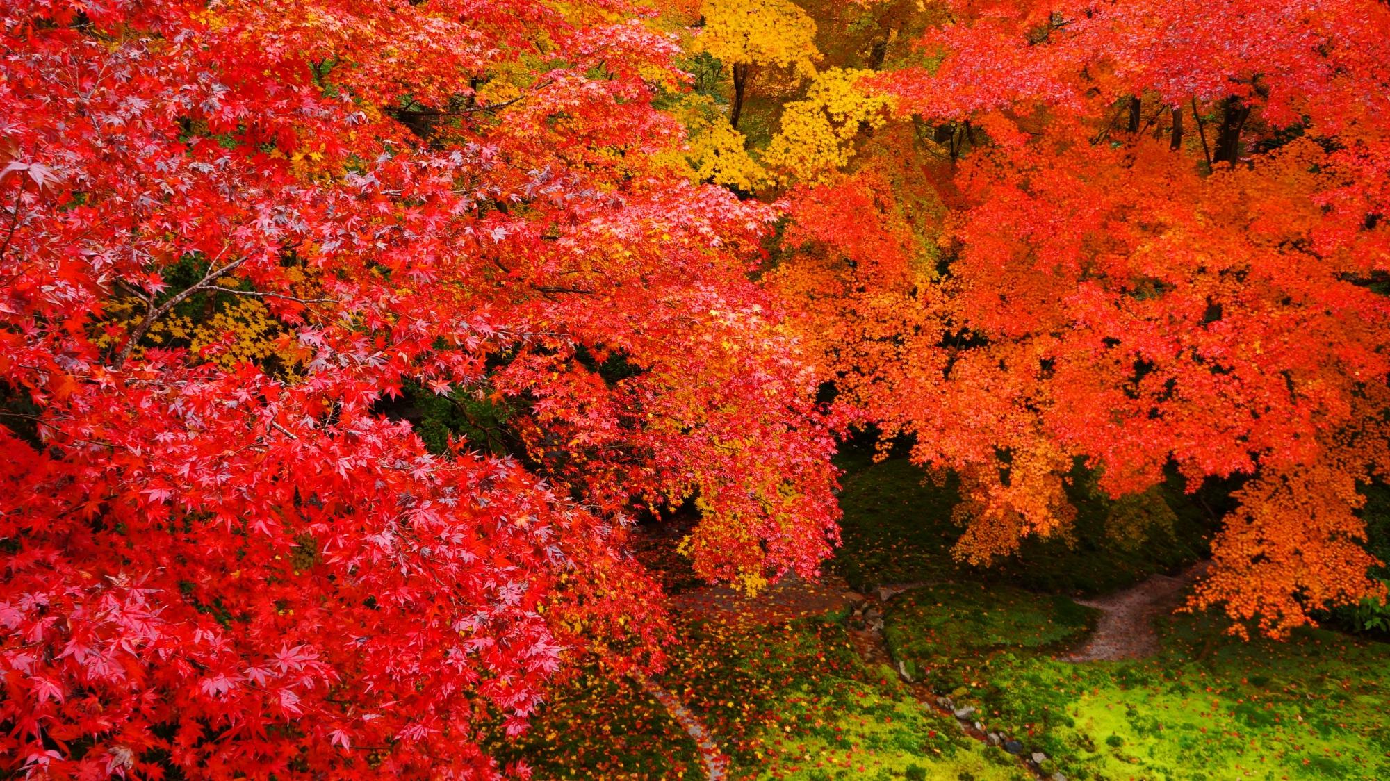 高画質 写真 瑠璃光院 紅葉