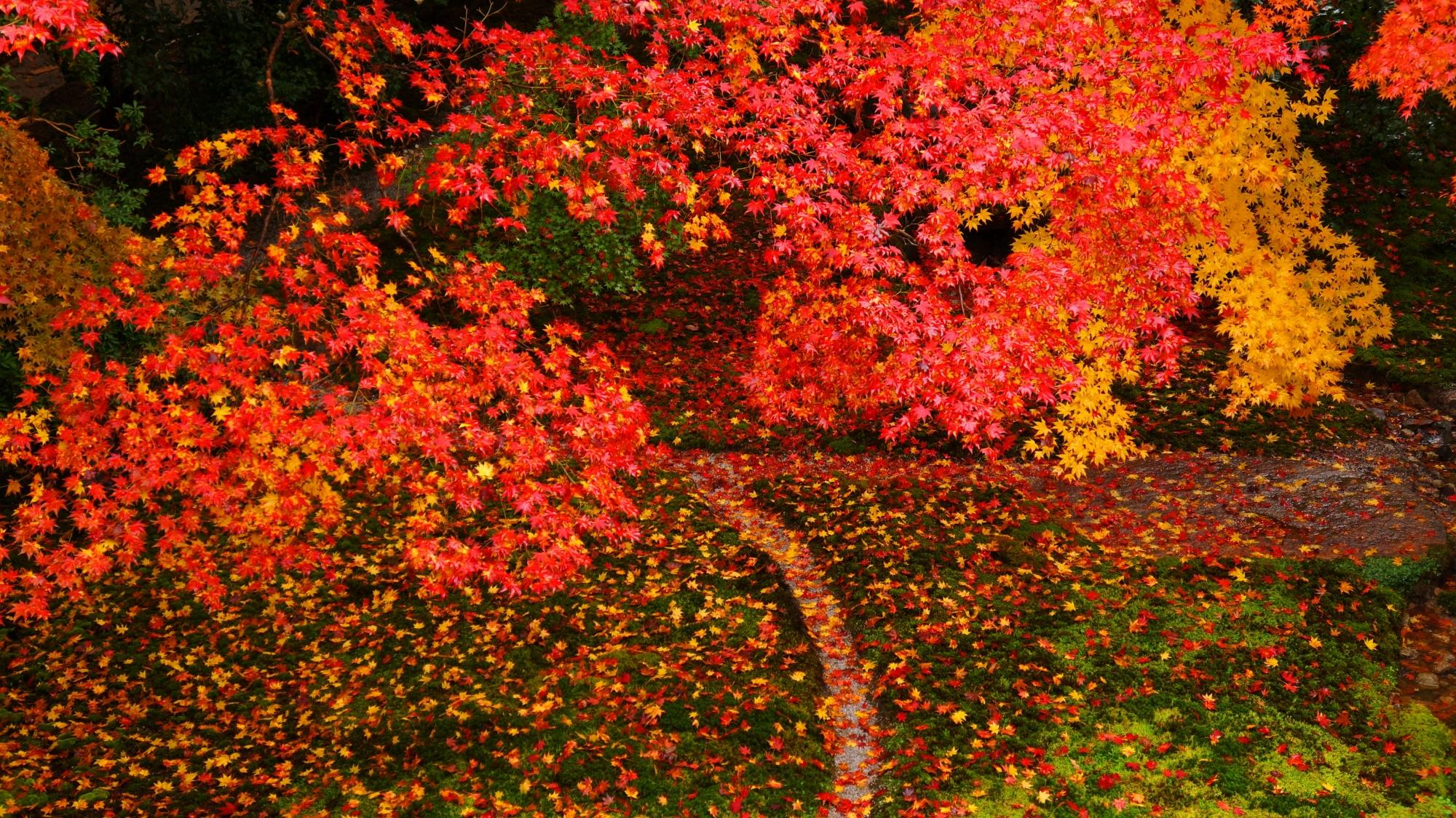 瑠璃の庭の緑の苔に散る色とりどりの紅葉