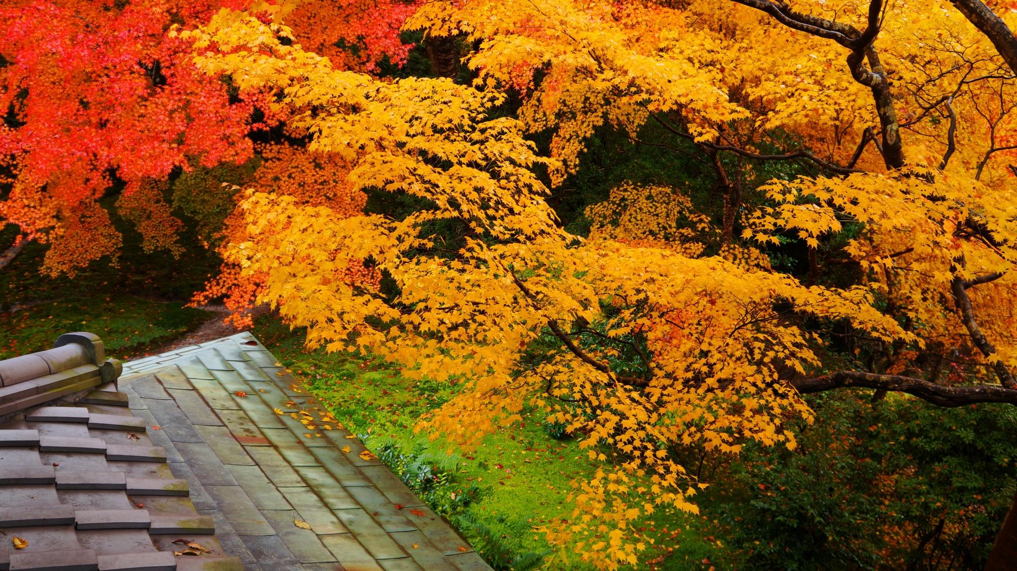 瑠璃光院の重なる赤い紅葉と黄色い紅葉