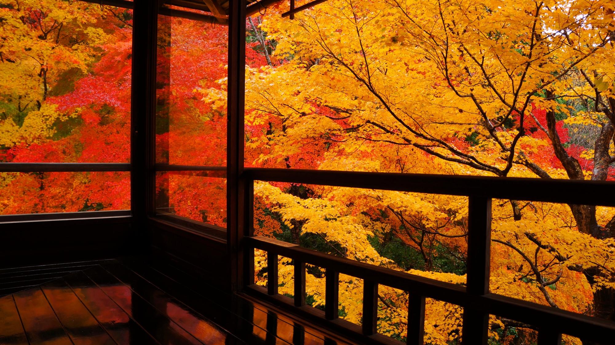 瑠璃光院の窓から溢れる黄色い紅葉