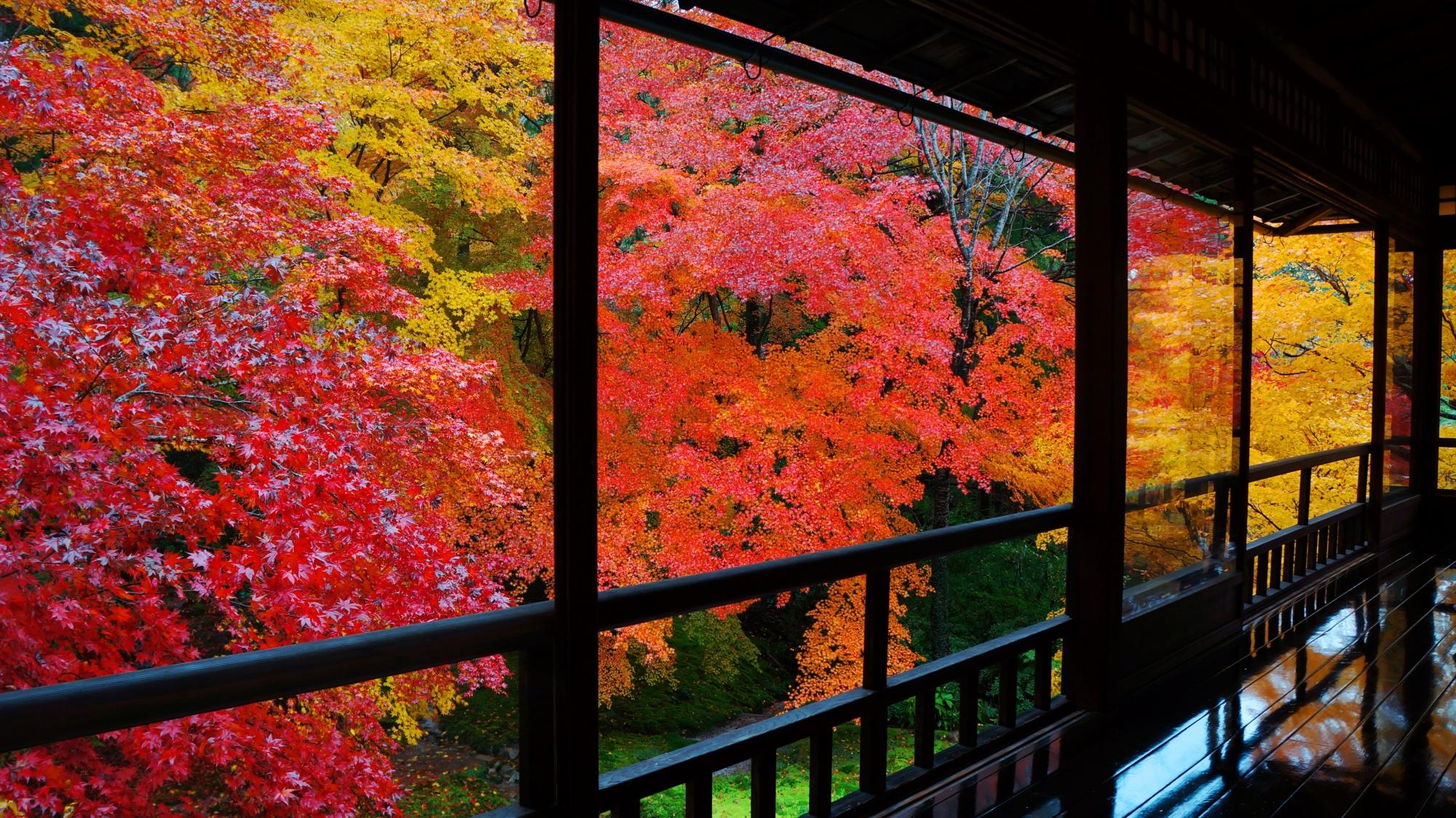 瑠璃光院の書院二階の窓に溢れる紅葉