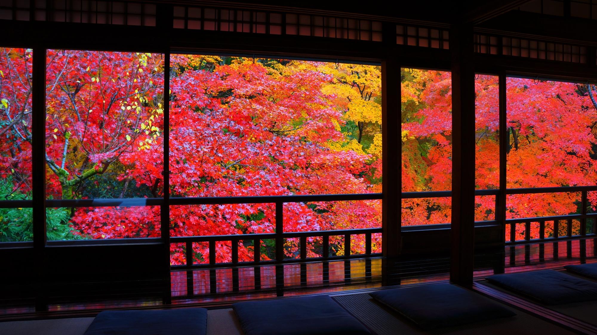 書院奥から眺めた瑠璃の庭