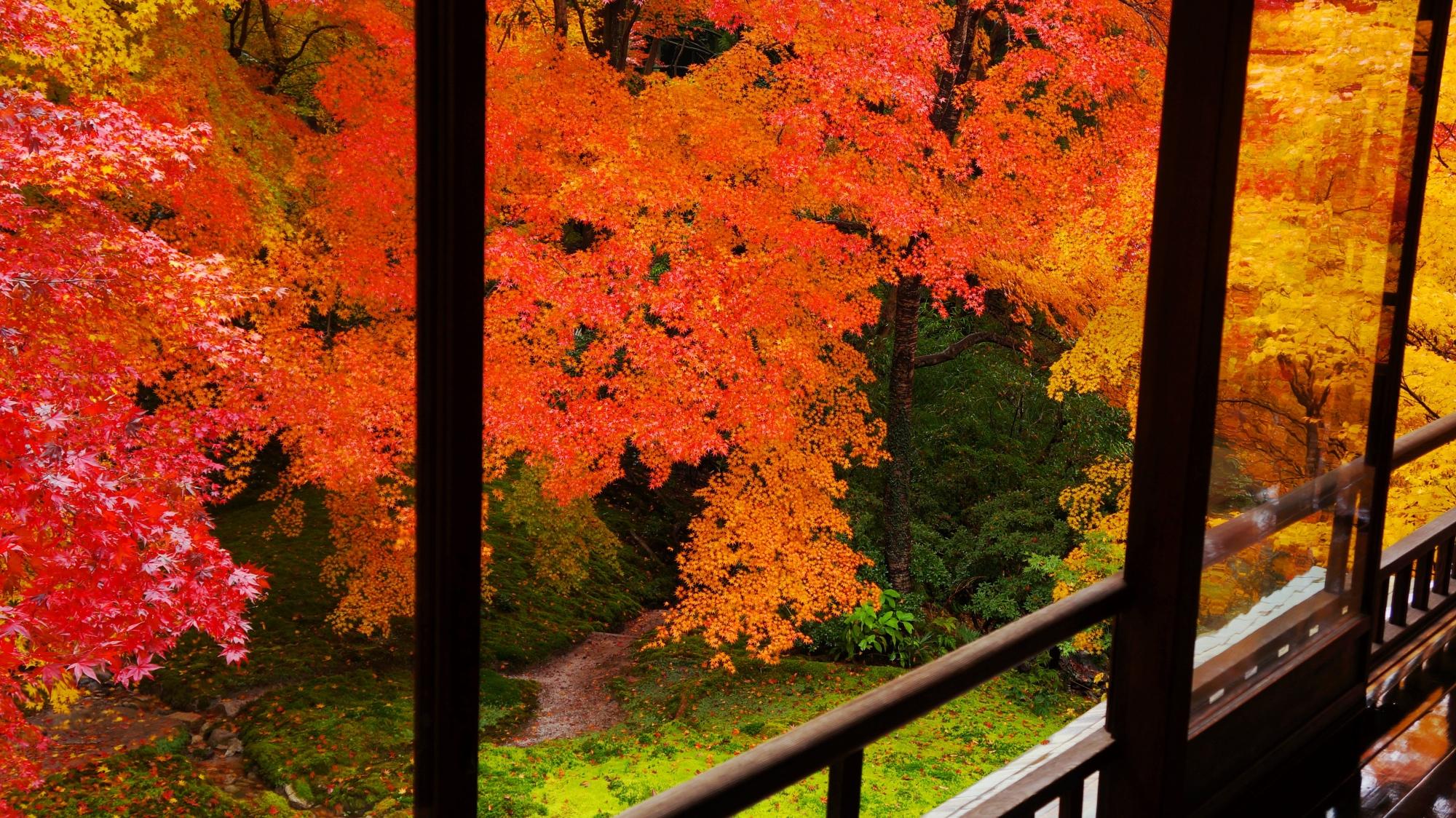 瑠璃光院の窓際から見下ろす色とりどりの紅葉