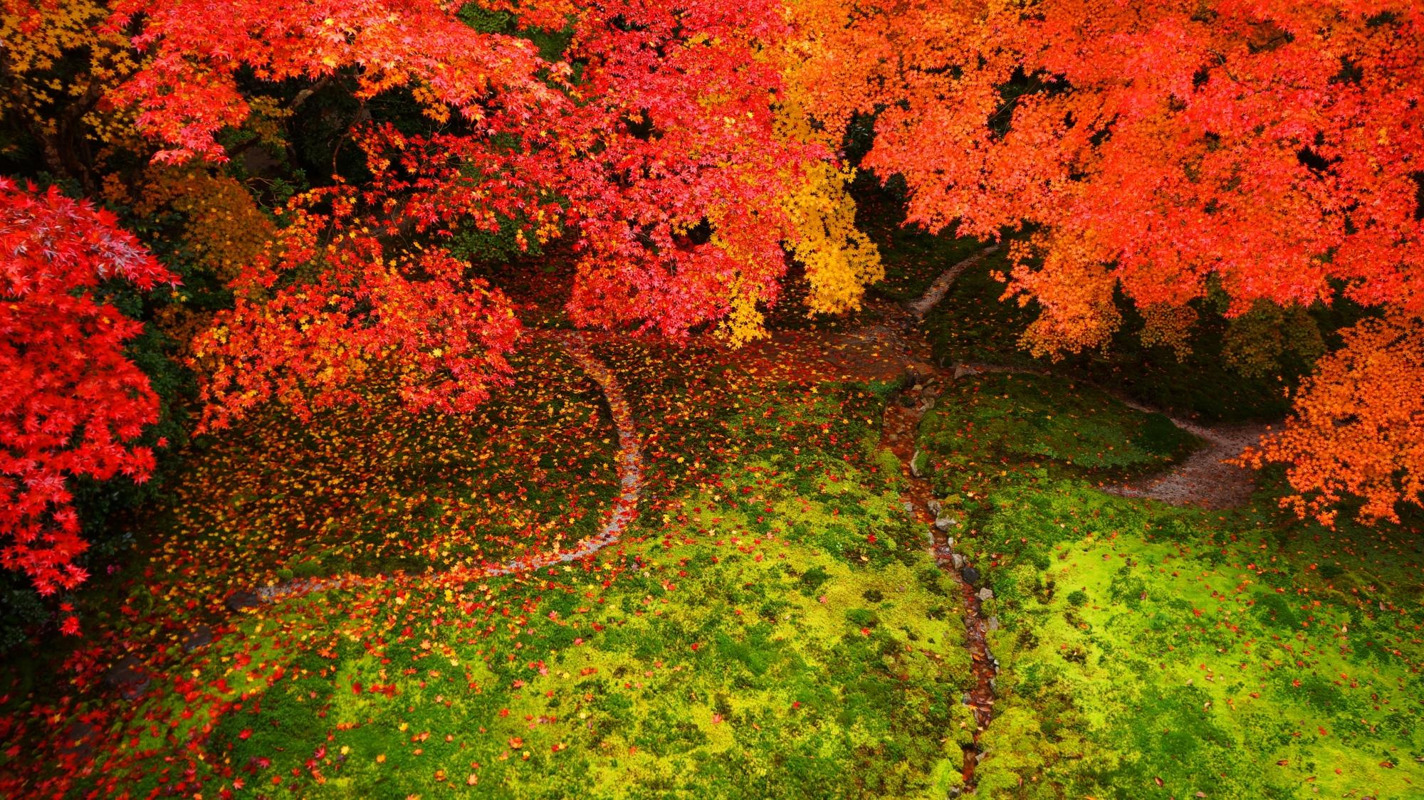 素晴らしい瑠璃光院の紅葉と情景