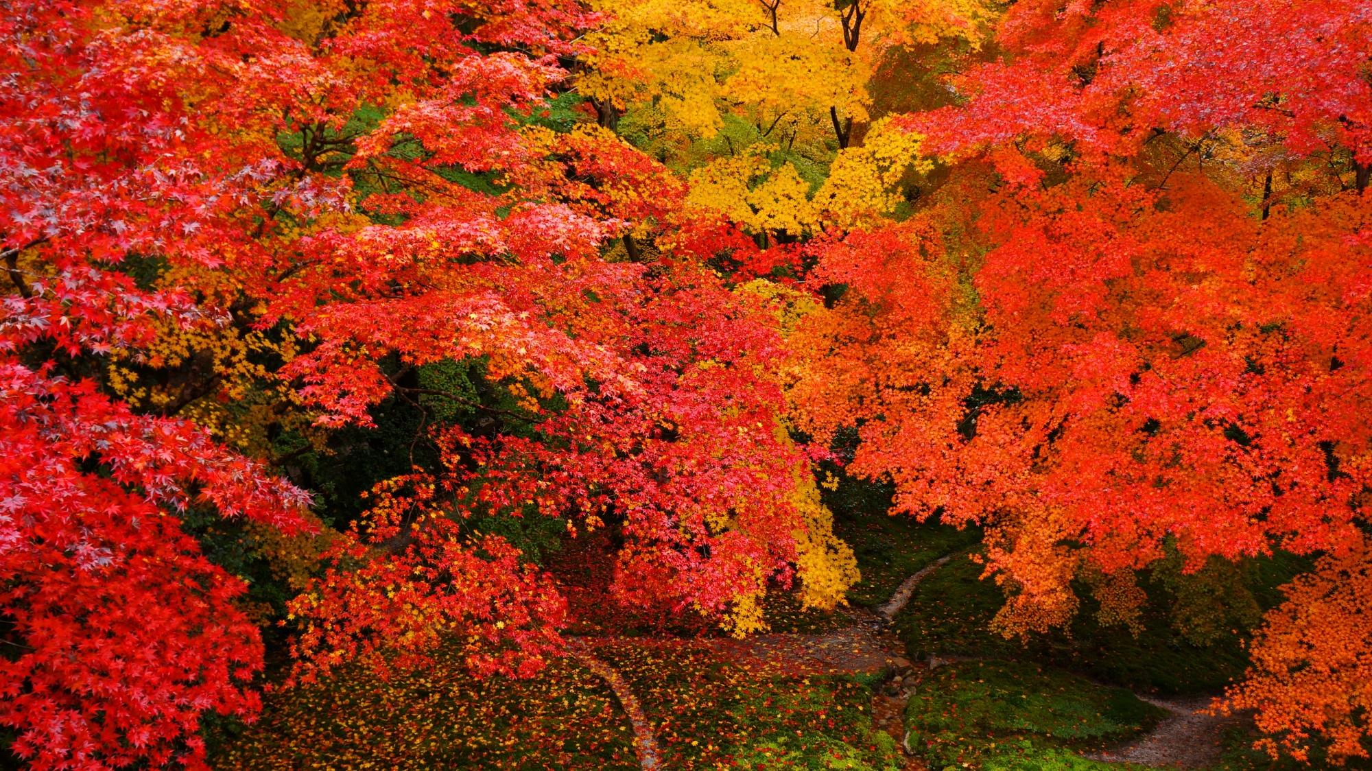 何時間でも見ていられる瑠璃光院の紅葉