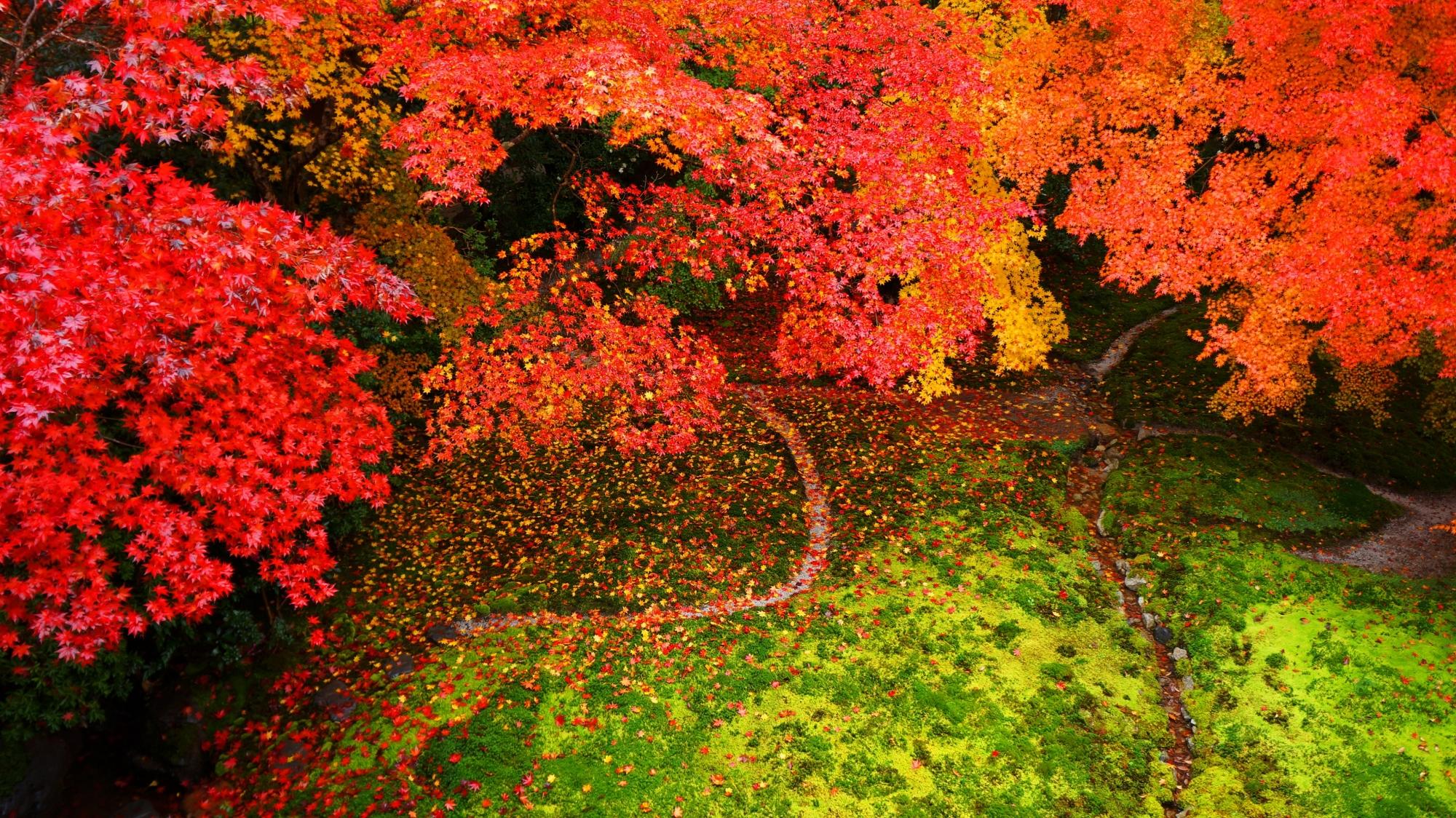 瑠璃光院の紅葉の絶景