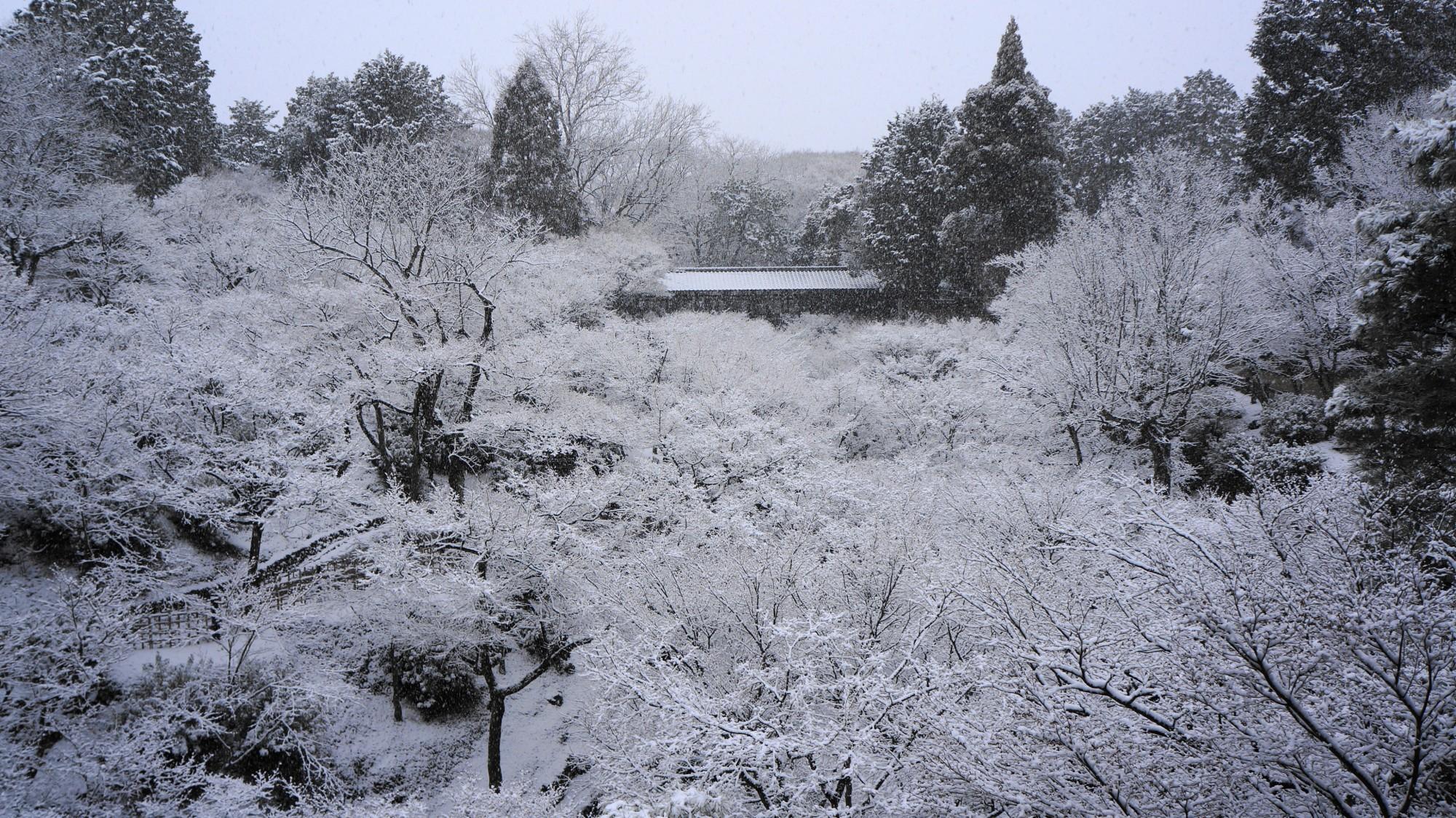 東福寺 雪景色 真っ白な冬の荒海と庭園