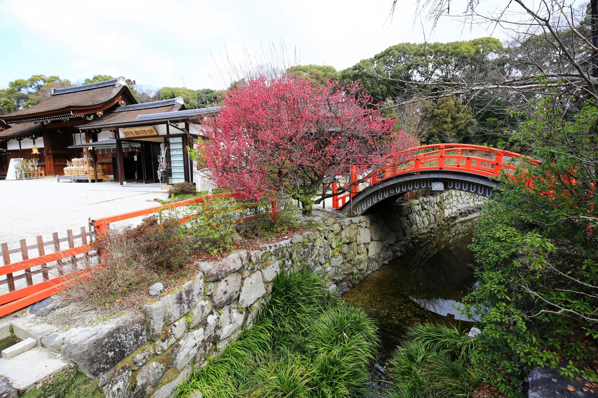 下鴨神社の素晴らしい光琳の梅と情景