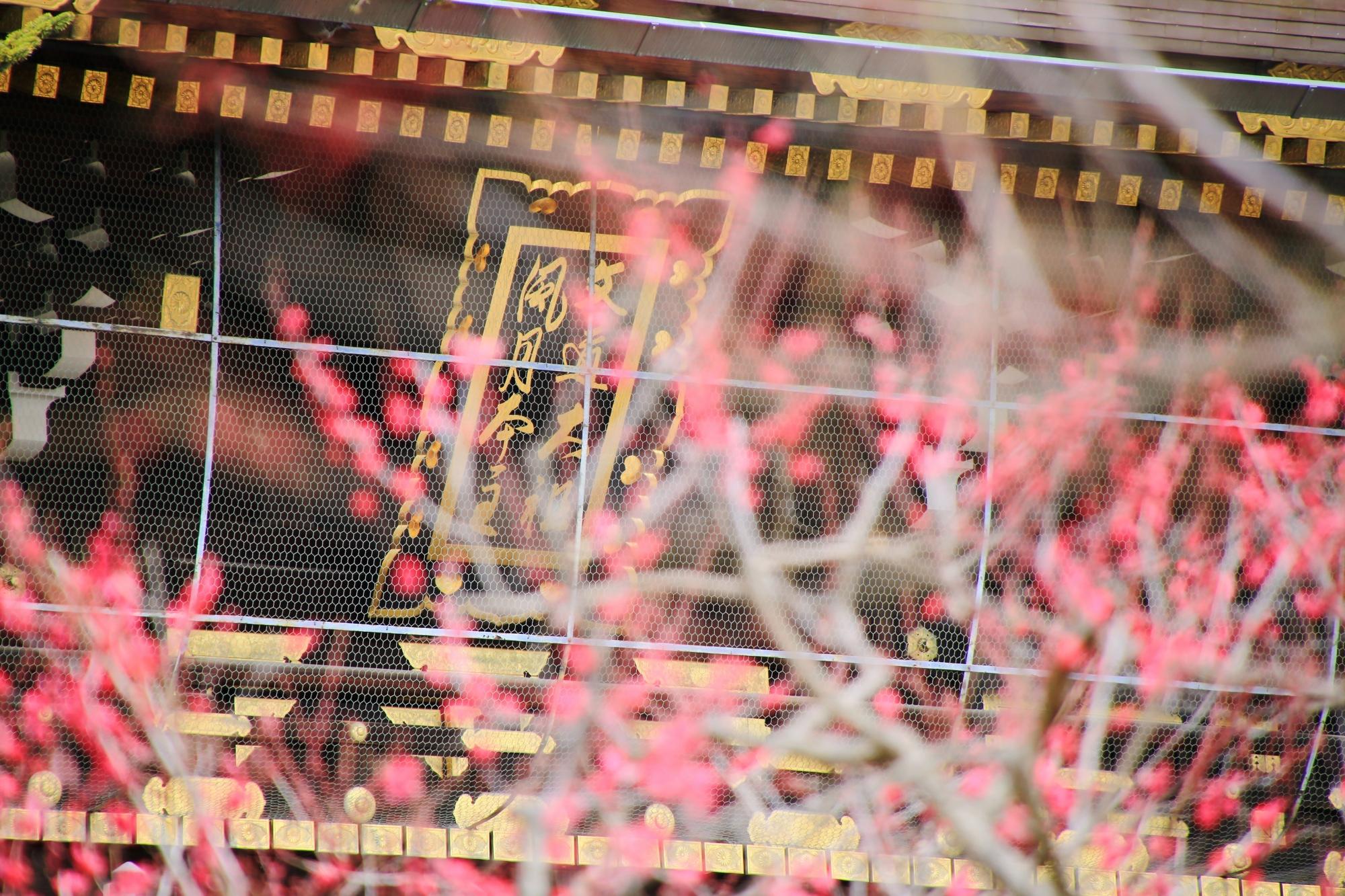 北野天満宮の楼門をつつむ梅の花と扁額