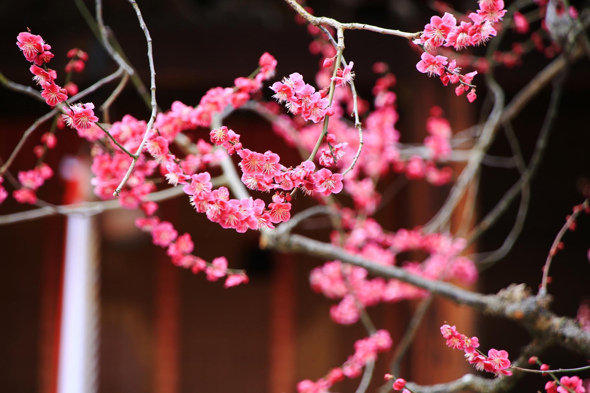 繊細で華やかなピンクの梅の花