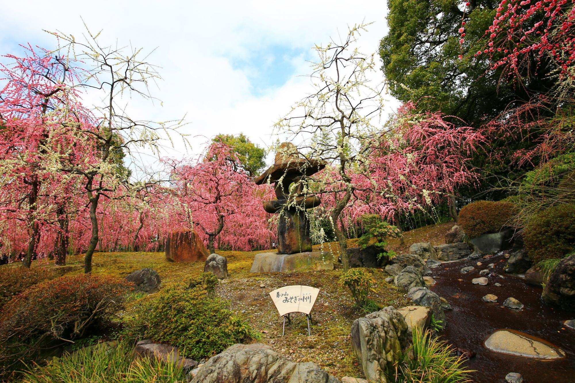 全体が見頃の神苑の春の山