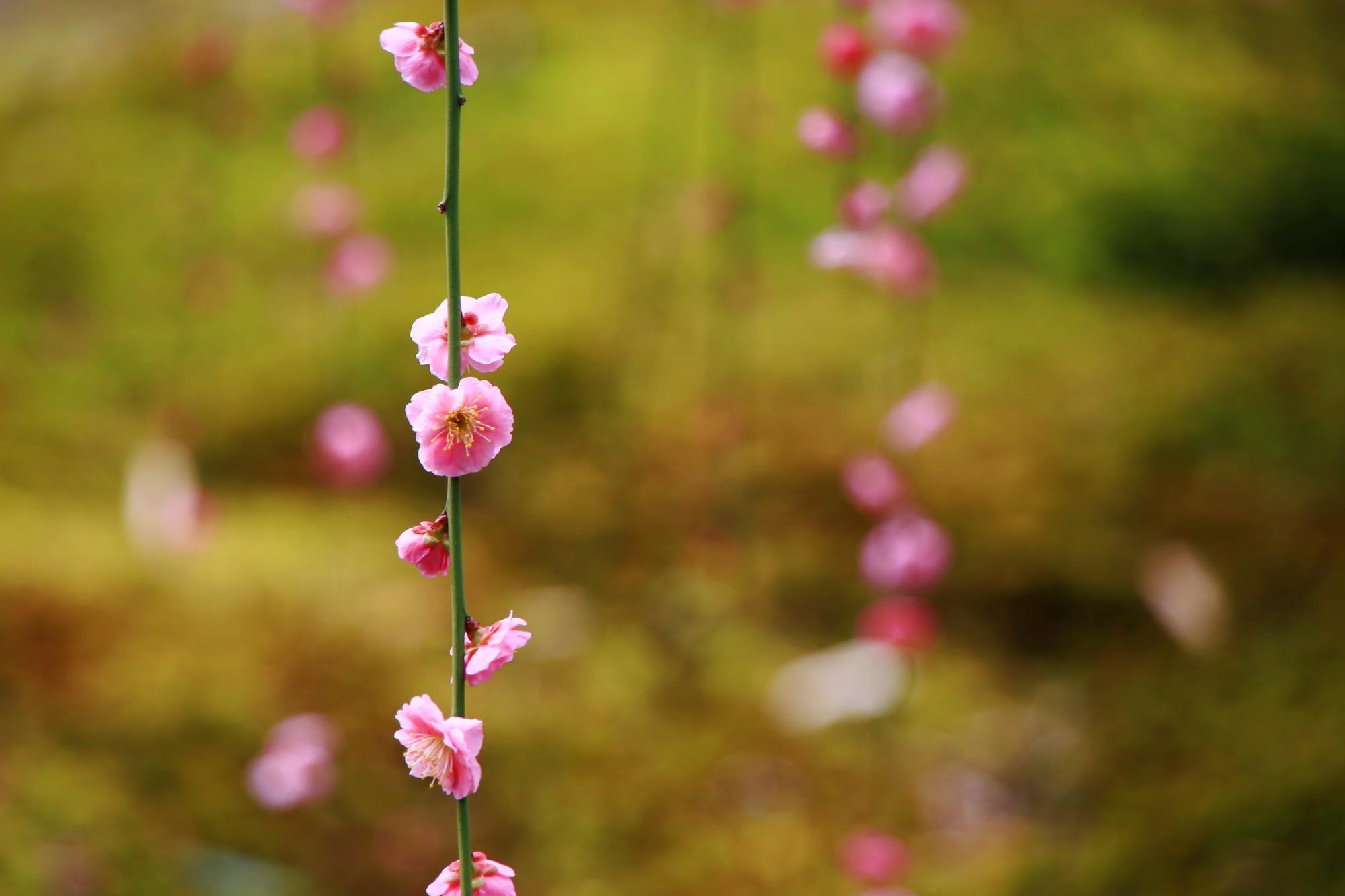 一つ一つは可愛らしい花
