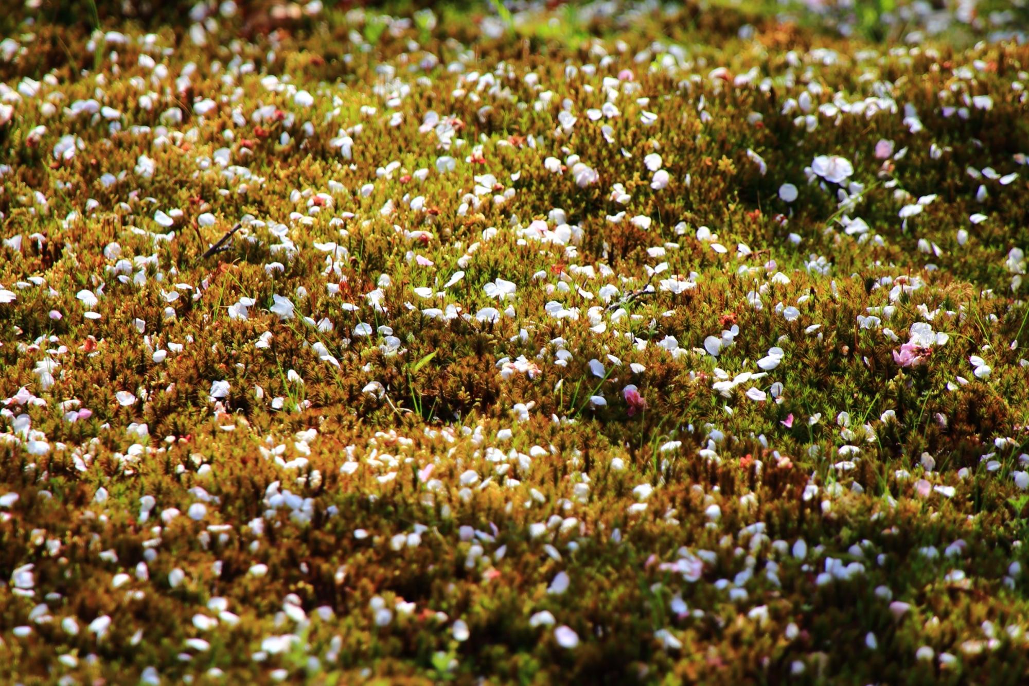 華やかな散った梅の花