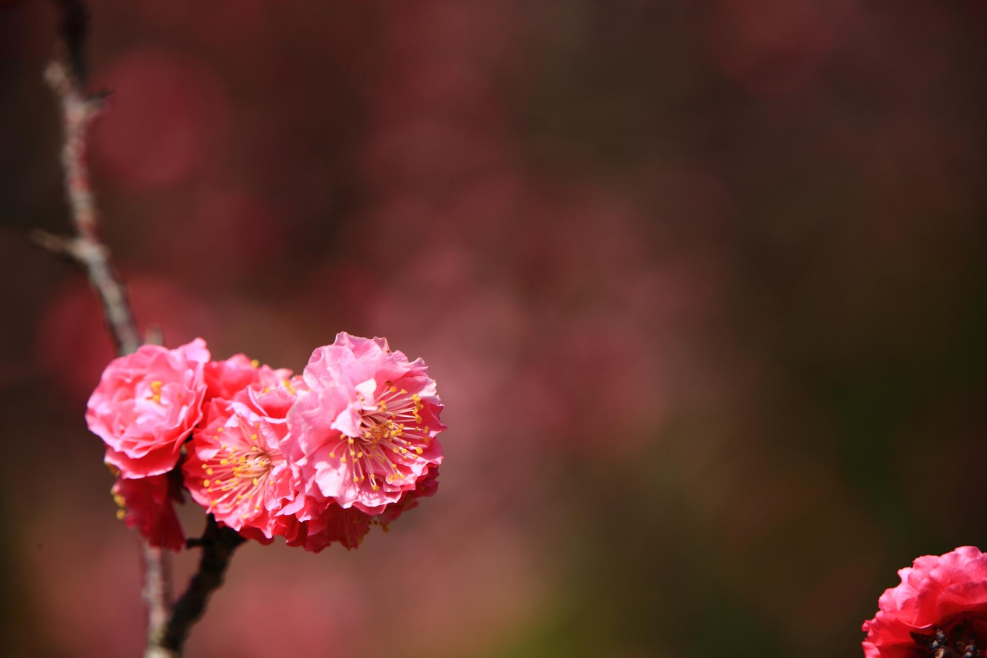 とても繊細な造りの梅の花