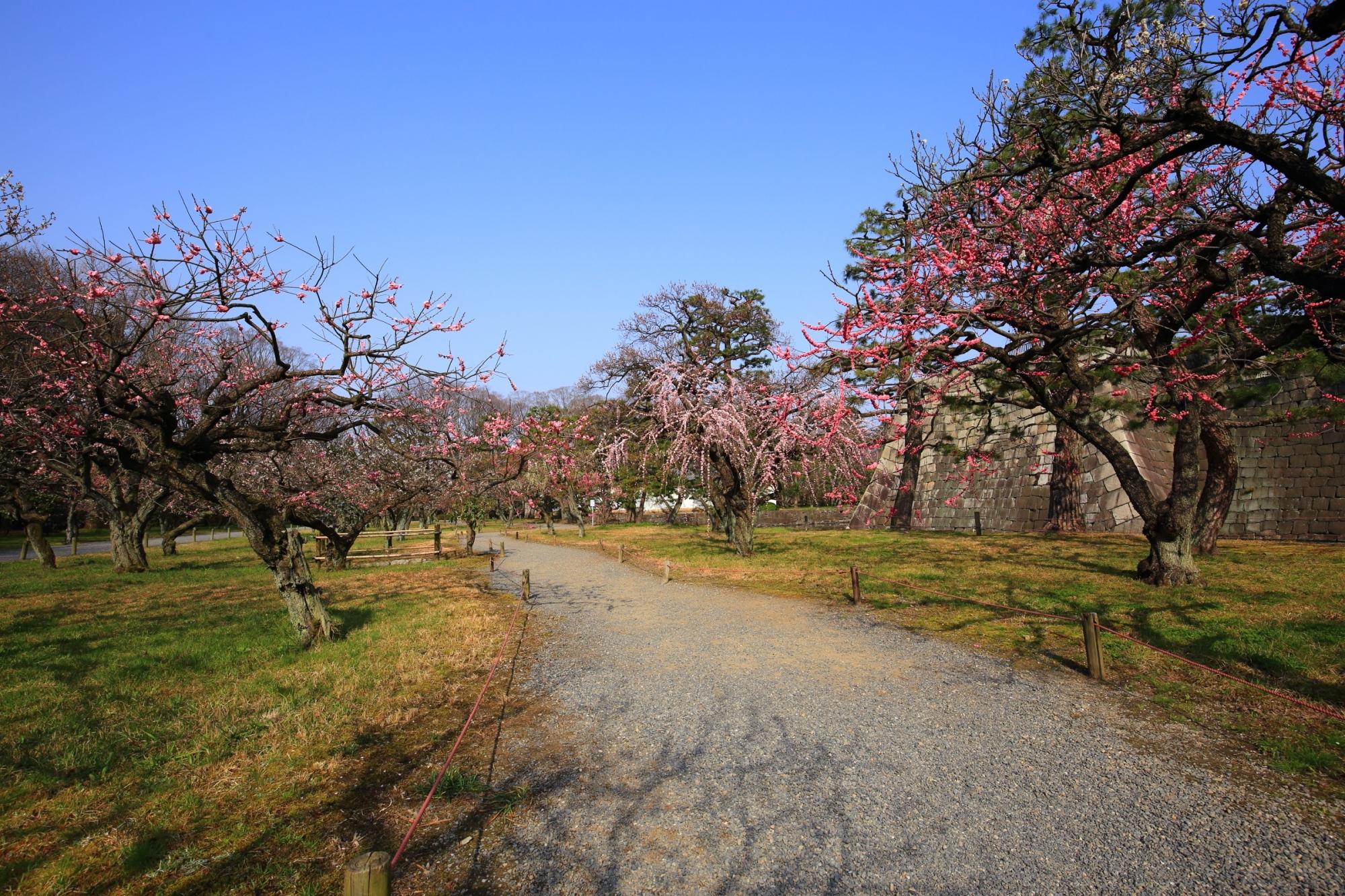 色とりどりの多種多様な梅が咲く二条城