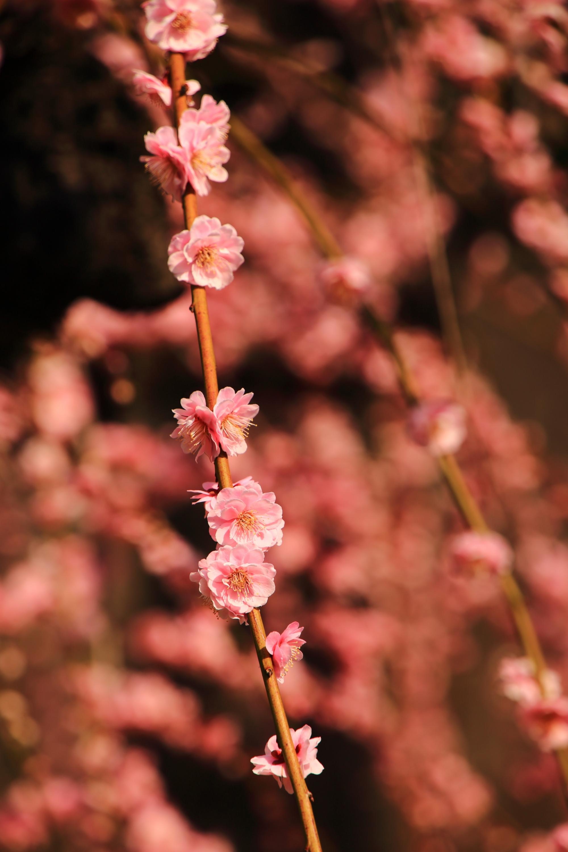 繊細な造りの見事な梅の花