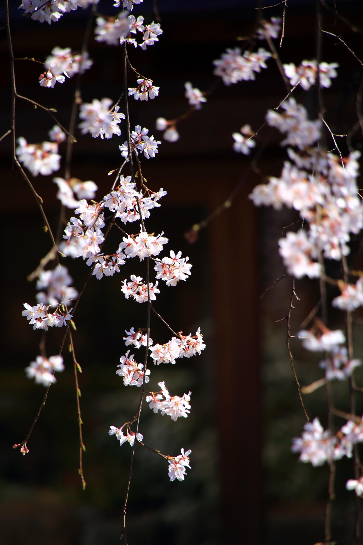 しなやかに揺らぐ可憐な花