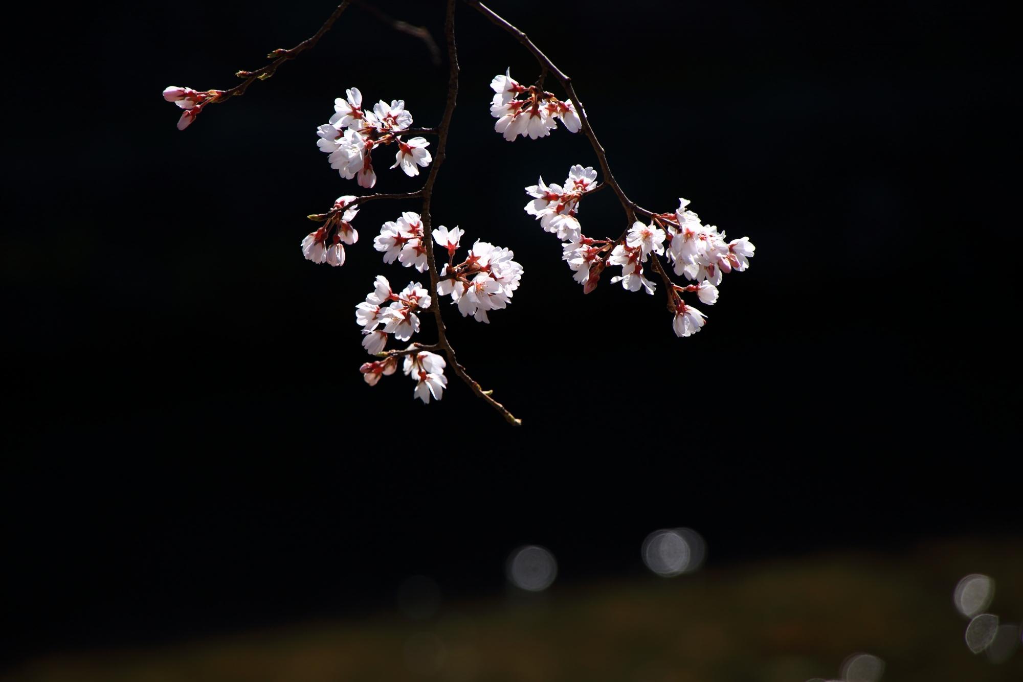 水辺で華やぐ可愛い花