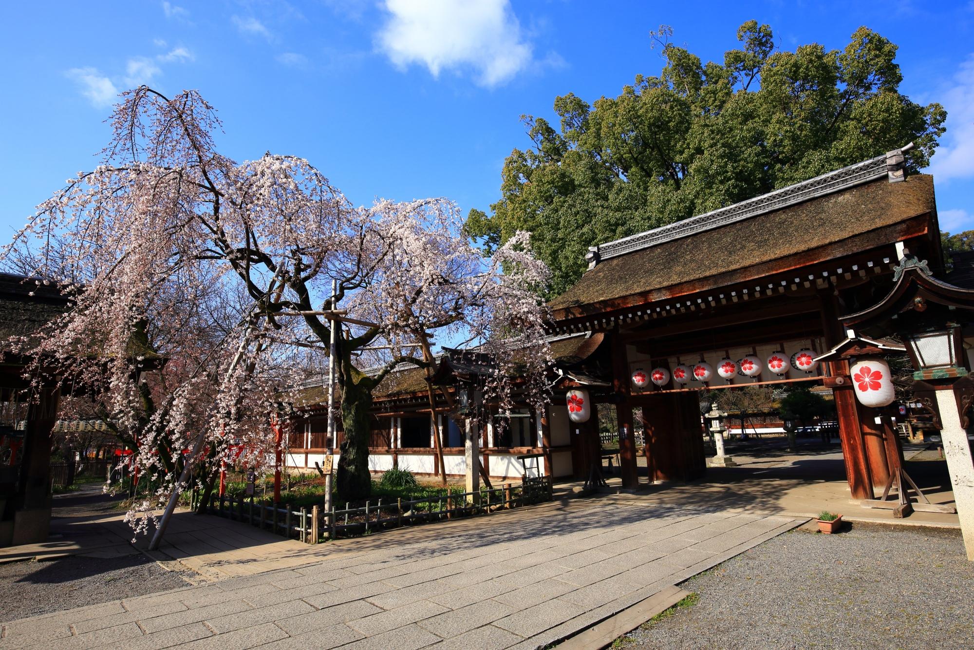 高画質 写真 魁桜 平野神社