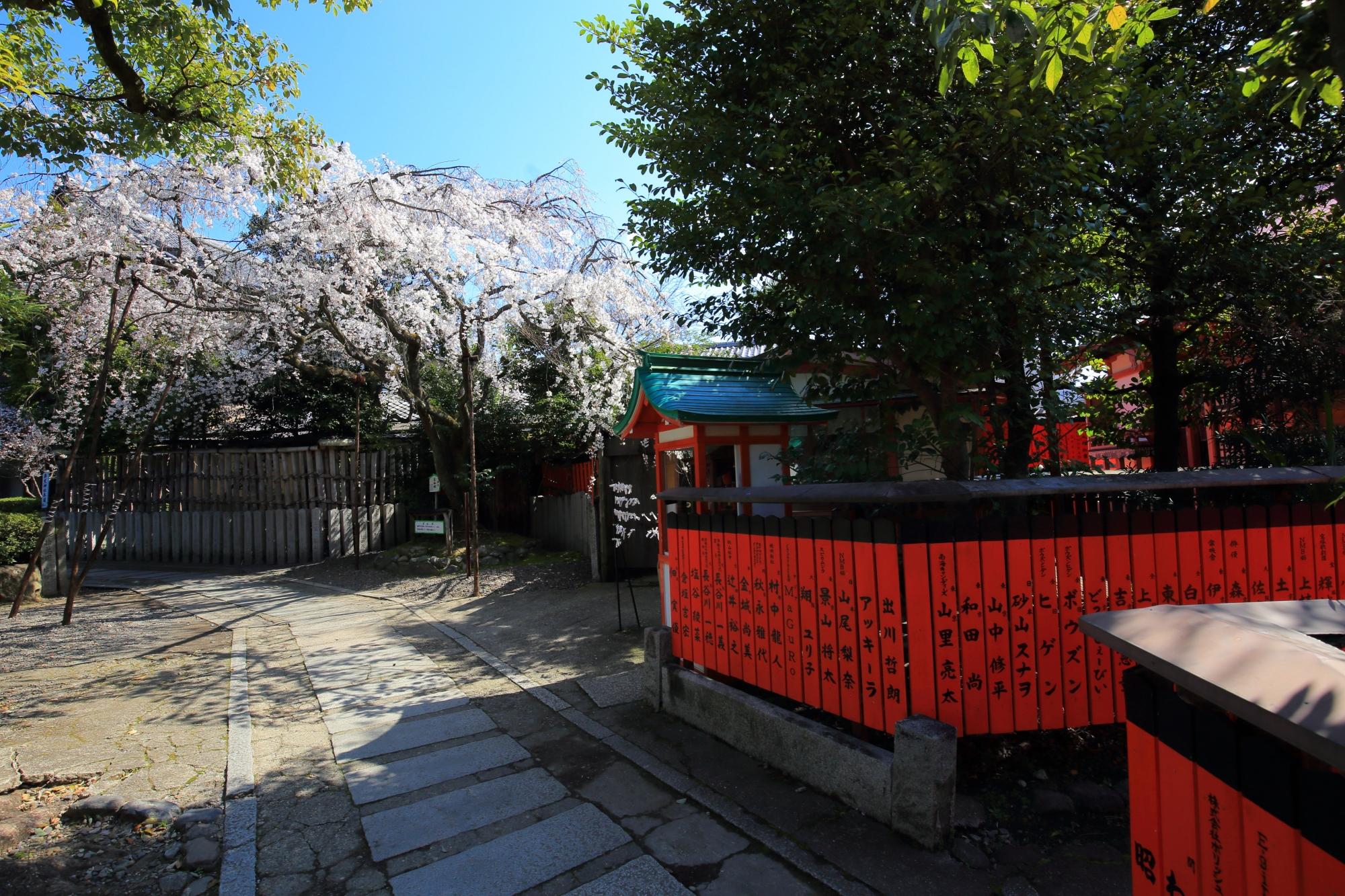 車折神社の早咲きの渓仙桜(けいせんざくら)