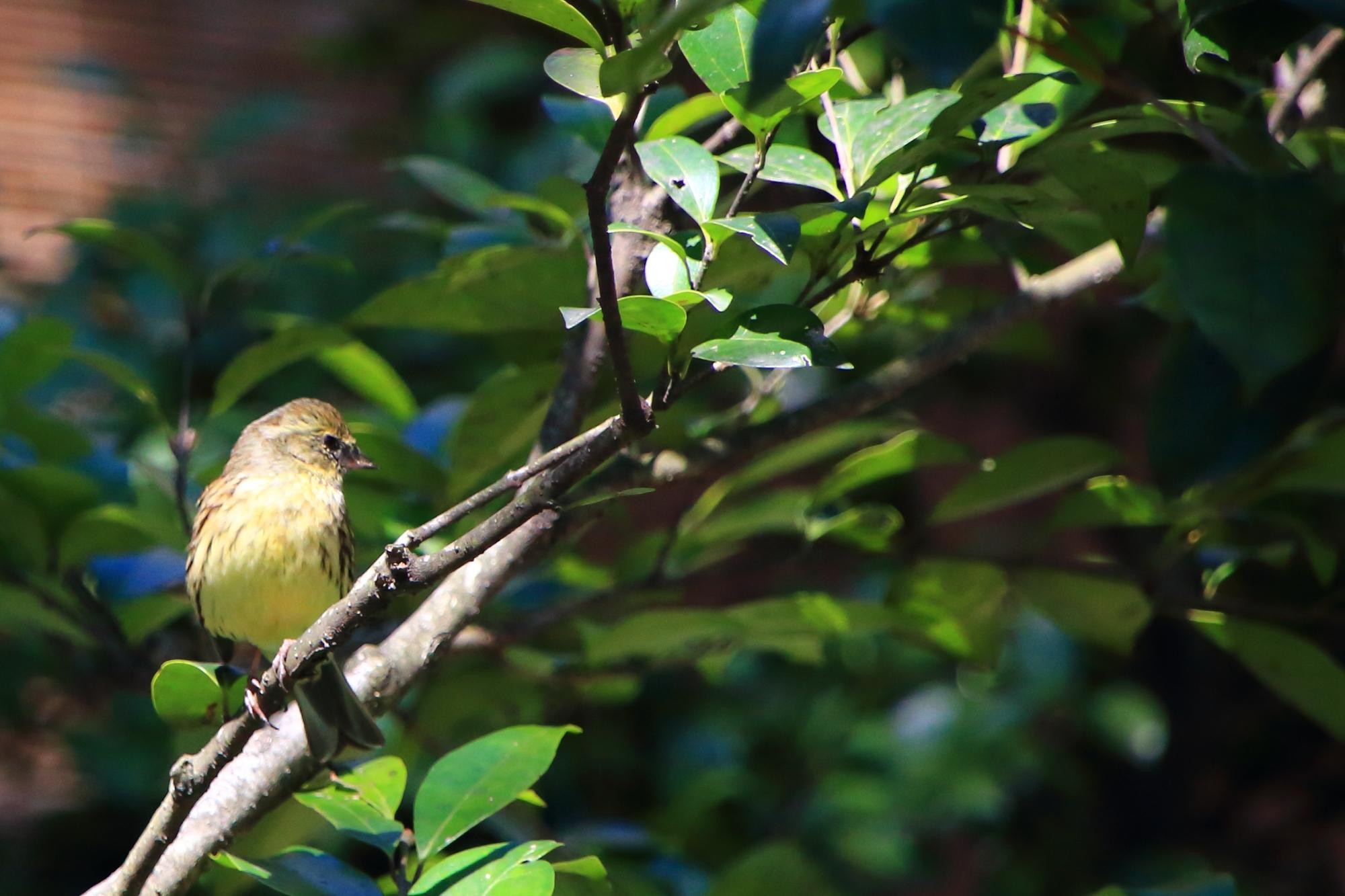 車折神社の境内にいた鳥さんたち